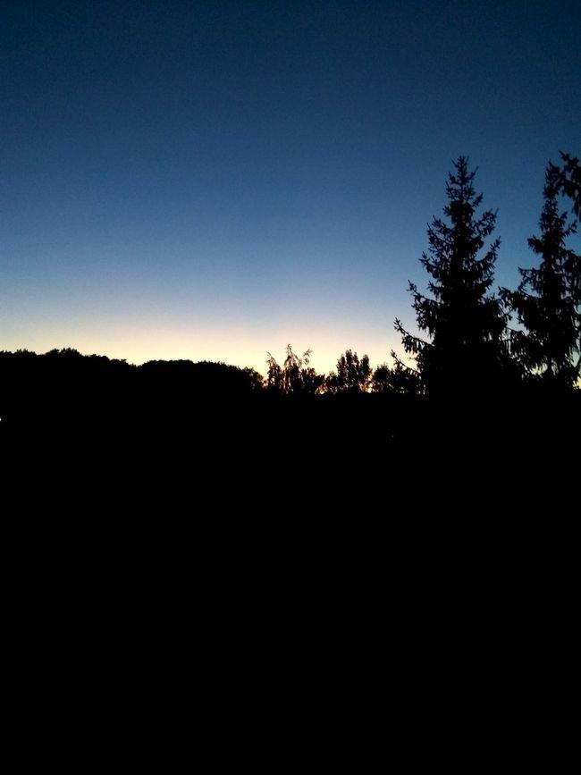 Sunset Trees Sky Summer Pootd