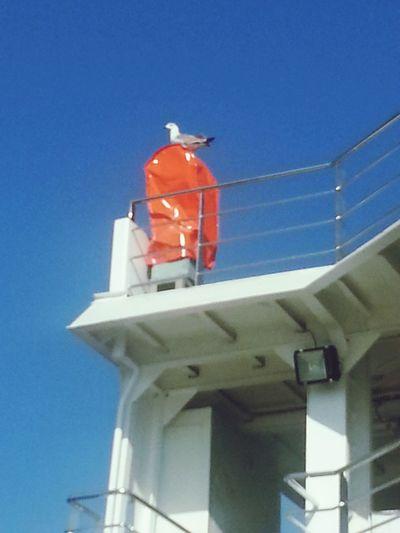 Ferryboat Sky Seagull Sharpglances Bird Photography Eyemnaturelover