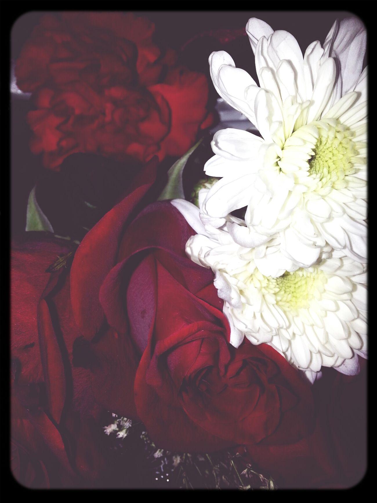 لک أنتمي ولک الفؤاد يميلُ ..سيدي لا تلم قلبي فالعاشق في لذة العشق يهيمُ .. كيف لا اهيمُ بک ولنور وجهک شقت كعبة الاسلام جدارها لتلثم لك جبينُ