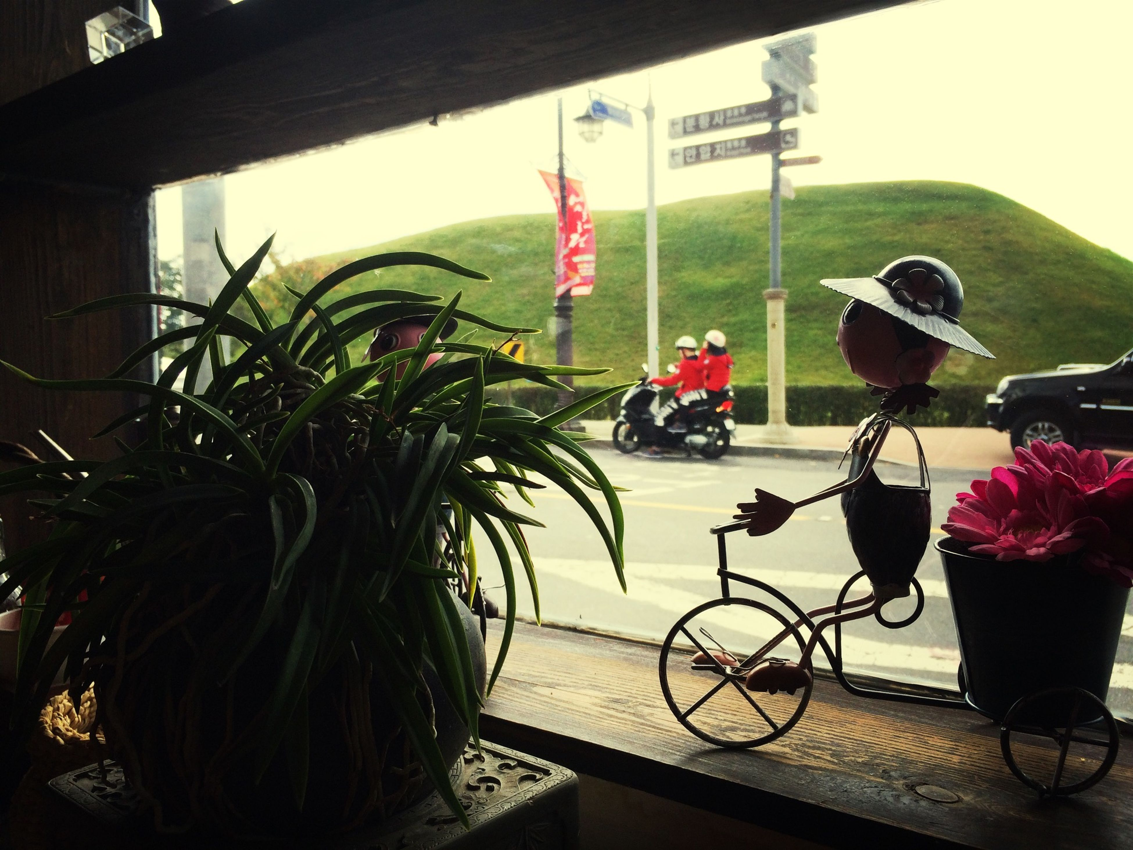 table, potted plant, plant, built structure, bicycle, chair, architecture, indoors, flower, building exterior, day, absence, growth, hanging, no people, house, sunlight, mode of transport, land vehicle, transportation