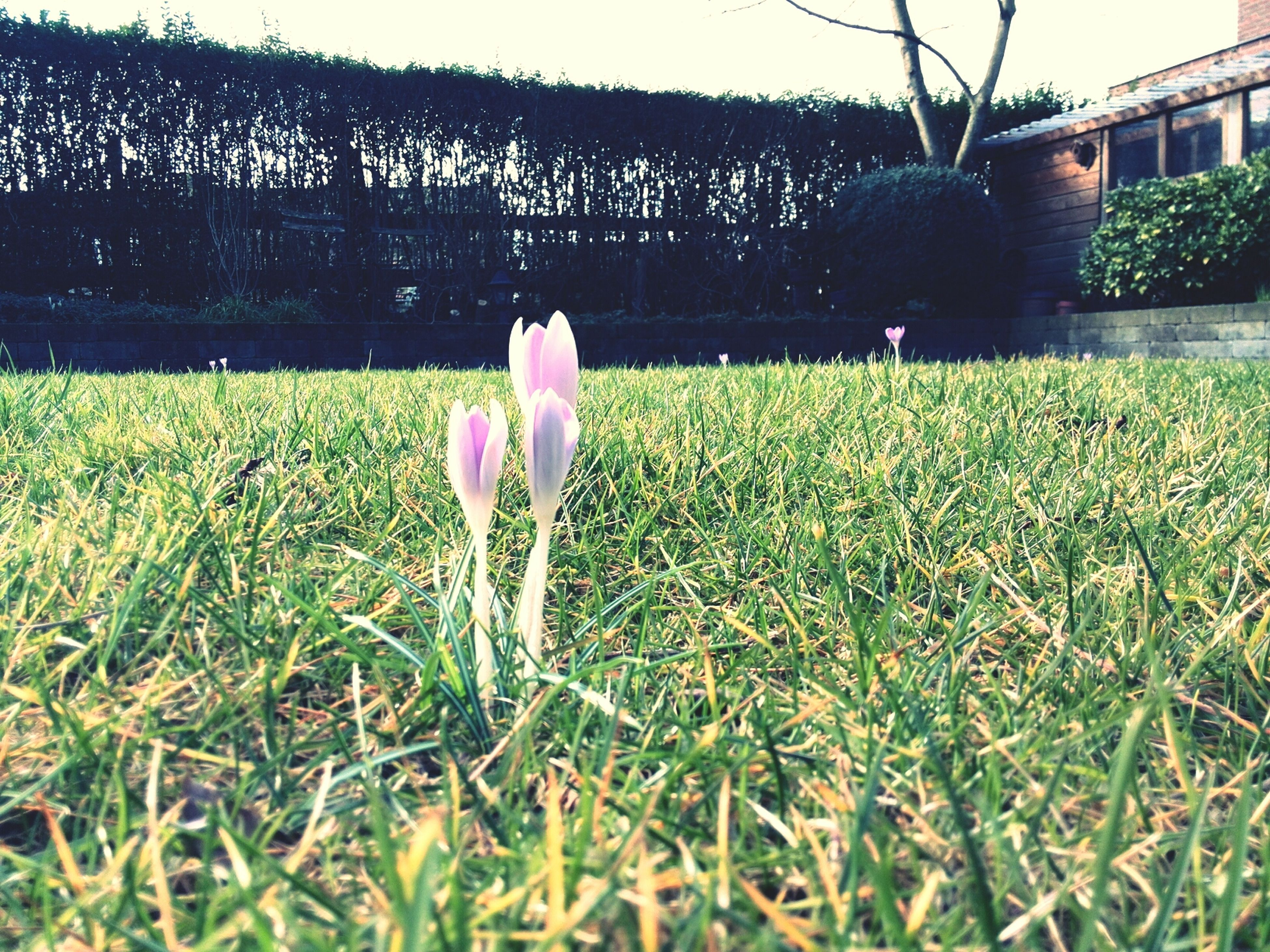 grass, field, flower, growth, grassy, rear view, plant, nature, freshness, green color, standing, fragility, beauty in nature, lawn, lifestyles, outdoors, day, leisure activity