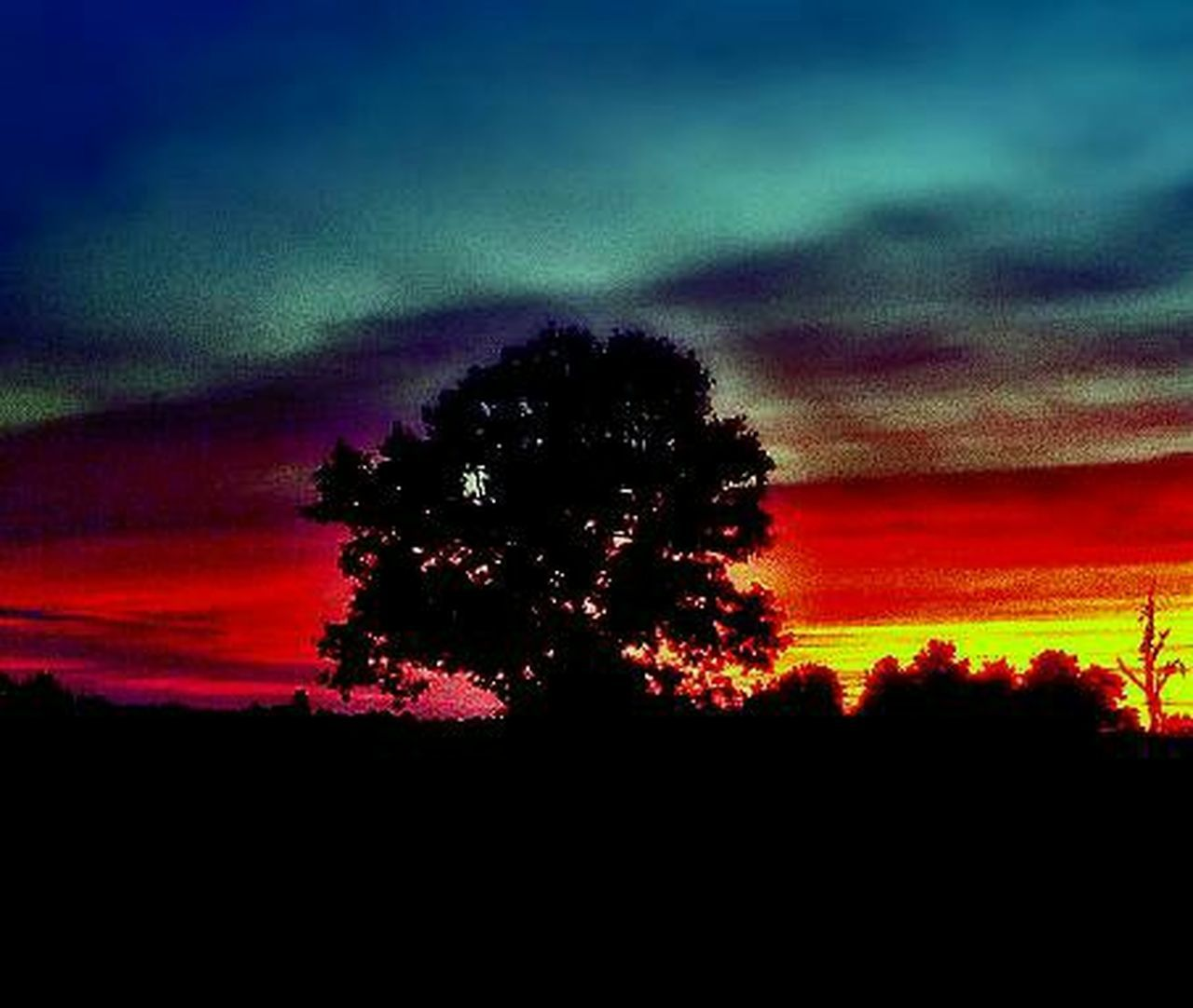 tree, silhouette, nature, sky, sunset, beauty in nature, dramatic sky, scenics, majestic, tranquility, tranquil scene, growth, cloud - sky, no people, landscape, outdoors, night, astronomy