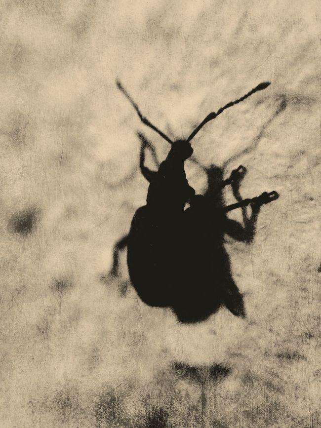 Guter Freund von mir ist auf einem steinigen Weg. Insects  Macro Photography