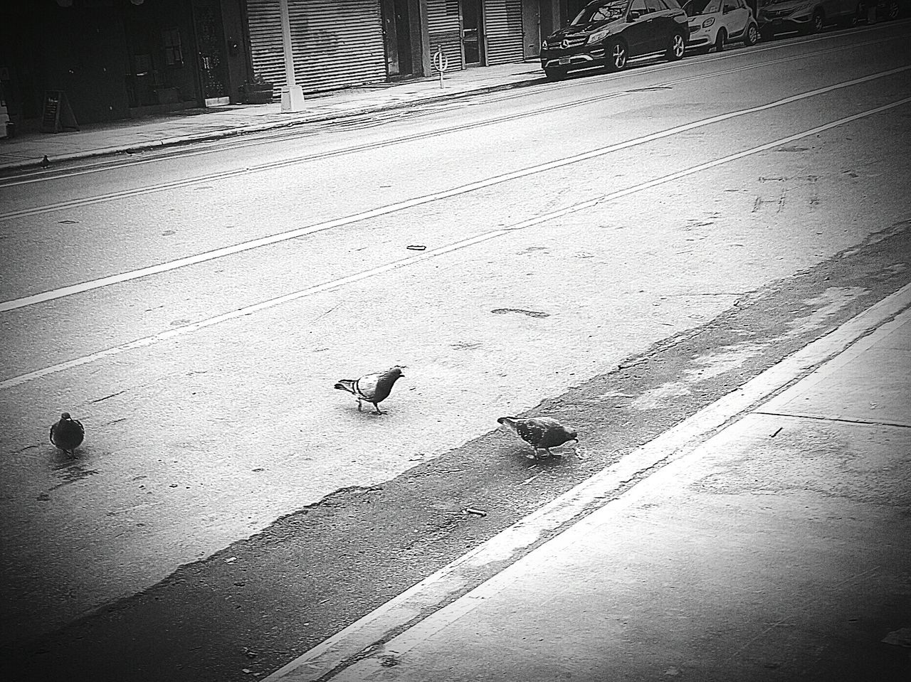 Hood Birds.. black n white version.. High Angle View Outdoors Day No People Nature Architecture Animal Themes Animal Body Part Beauty In Nature Adapted To The City EyeEmNewHere City Williamsburg, Brooklyn  Eyemphotography Pigeonslife Noflyingsouth Ratswithwings Street Road Uniqueness