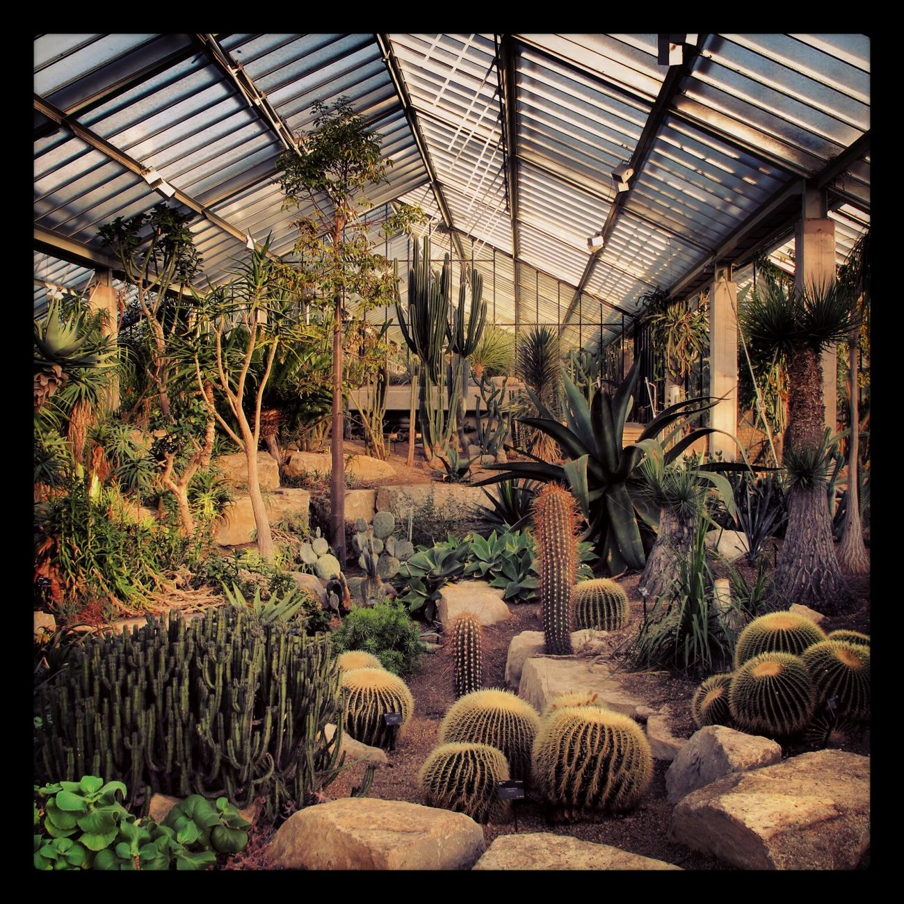 Kewgardens London Natureinabottle Cactirus