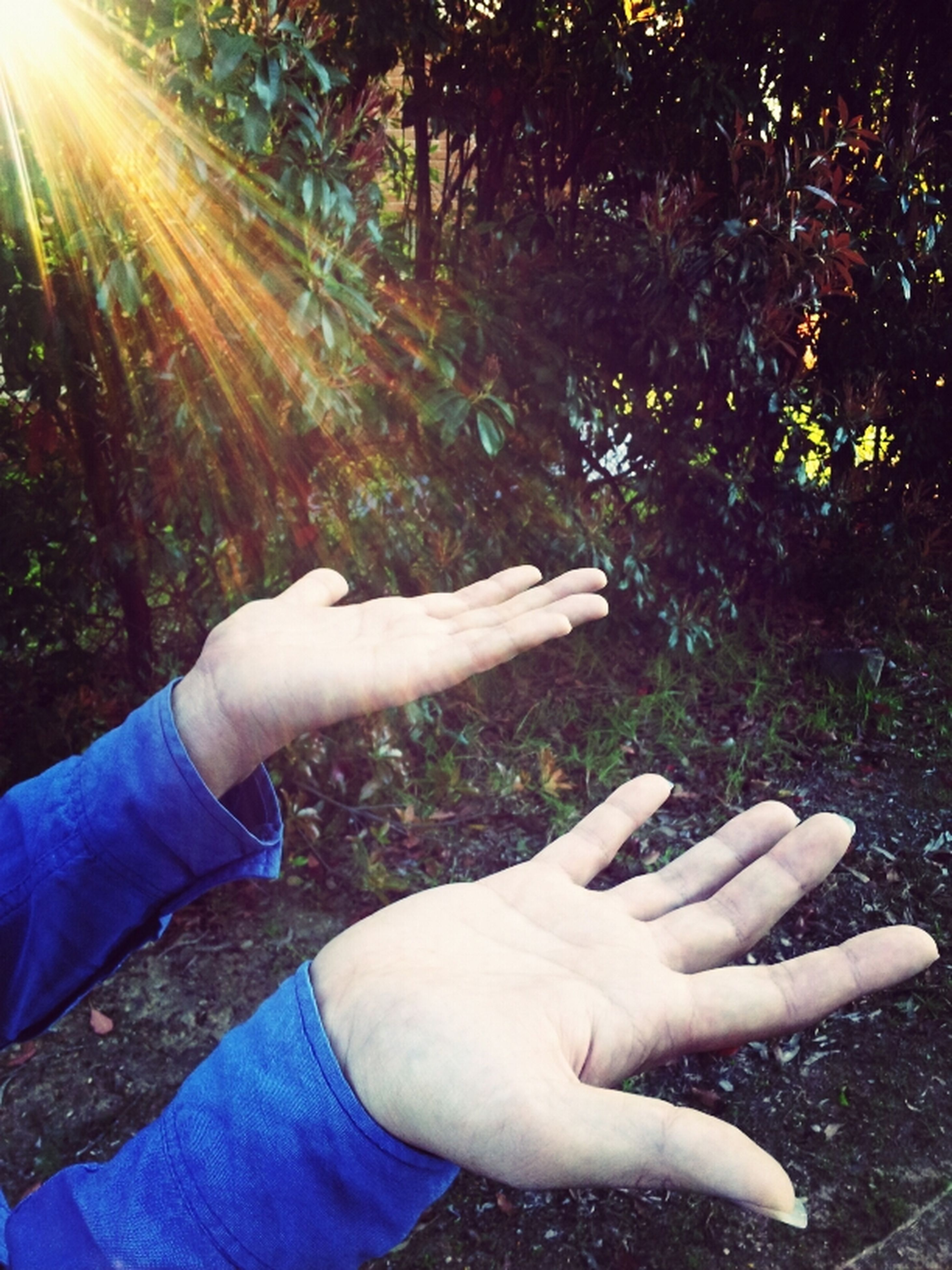 person, personal perspective, part of, lifestyles, holding, leisure activity, unrecognizable person, tree, human finger, cropped, men, low section, sunlight, day, one man only