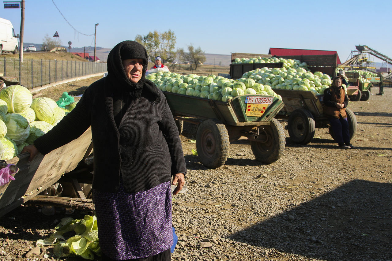 Agriculture Bukovina Cabbage Carts Day Fair Farmers Farmers Life Farmers Market Farmersmarket Food For Sale Healthy Eating Market Marketplace One Person Outdoors Real People Real People, Real Lives Romania Standing Sunlight Vegetables