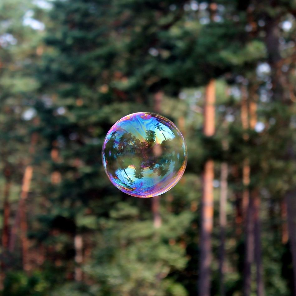 Trees No People Outdoors Forest Photography Photo Bubble Ball Bubble Close Up Colourful