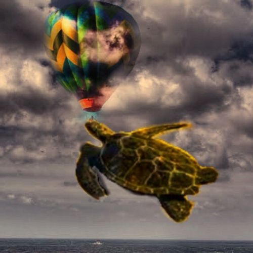 Animal Themes Animals In The Sky Animals In The Wild Colorful Flying High. Flying Turtle No People Turtle Wildlife