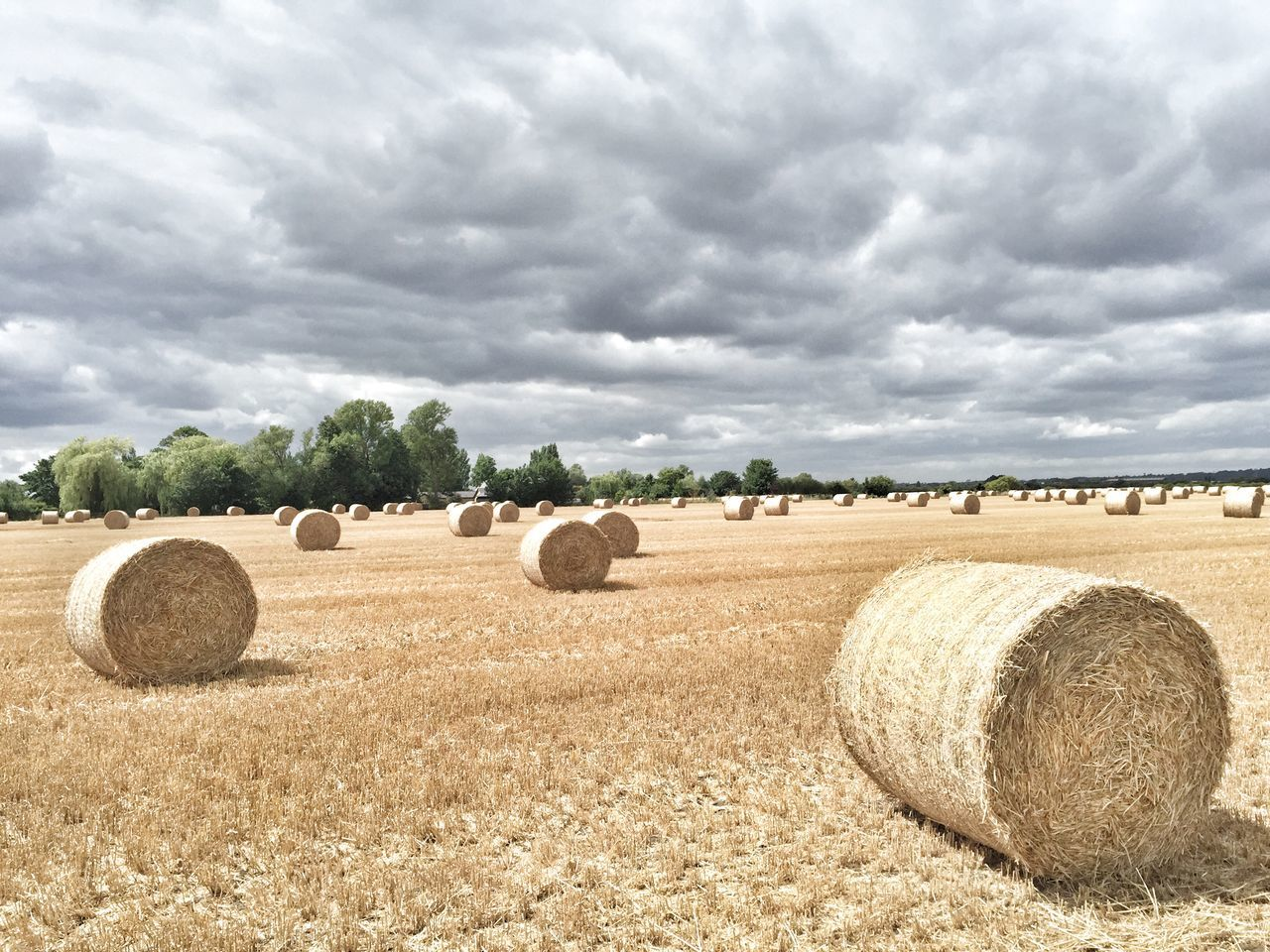 The flat fields of Buckinghamshire Countryside Farming