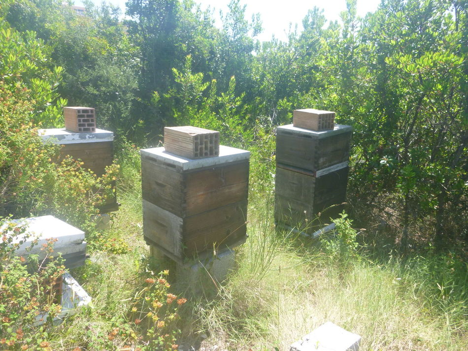 Absence Beauty In Nature Bee Hives Day Empty Front Or Back Yard Grass Grassy Green Green Color Growth Landscape Lush Foliage Nature No People Non-urban Scene Outdoors Plant San Stefanos, Corfu, Greece Scenics Tranquil Scene Tranquility Tree