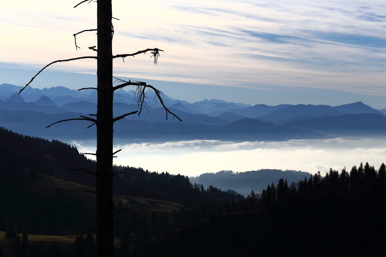 Looking down on fog towards Swiss Rigi. Air Pollution Bare Tree Beauty In Nature Cloud - Sky Dead Tree Eye4photography  EyeEm Best Shots EyeEm Gallery EyeEm Nature Lover Fog Forest Meditation Mountain Mountain Range No People Panorama Rigi Sadness Scenics Silhouette Smog Switzerland Tranquility Tree Zürcher Oberland