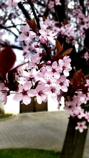 EyeEm Nature Lover Hello World Springtime Enjoying Life I Love Nature! Zauberhaft Dubistüberall
