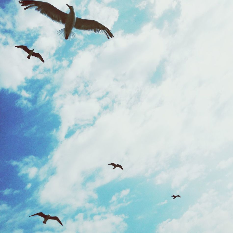 Flying Animal Themes Bird Animals In The Wild Low Angle View Mid-air Spread Wings Cloud - Sky Sky No People Animal Wildlife Nature Day Kavala Ferryboat Outdoors Beauty In Nature Tree EyeEmNewHere