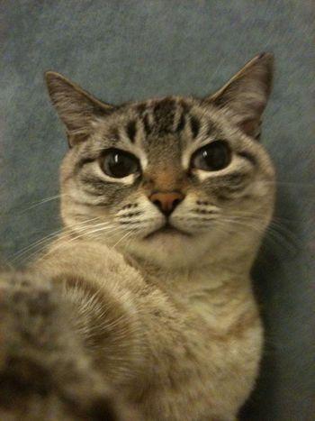 Selfportrait Cat Cute Cute Pets