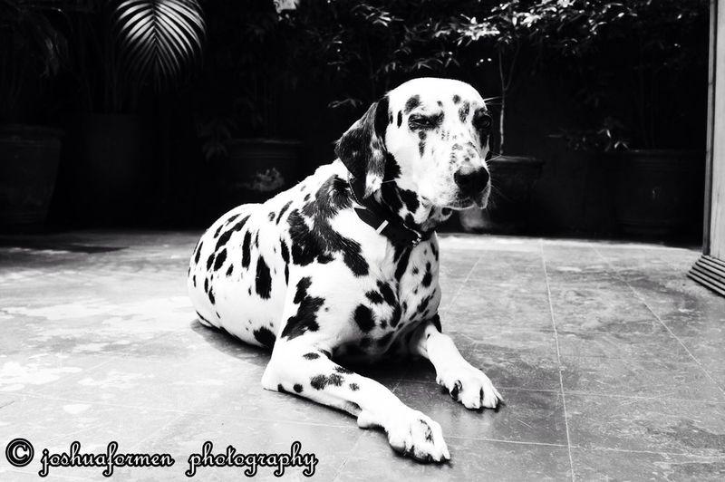 My Lovely Winky #dog