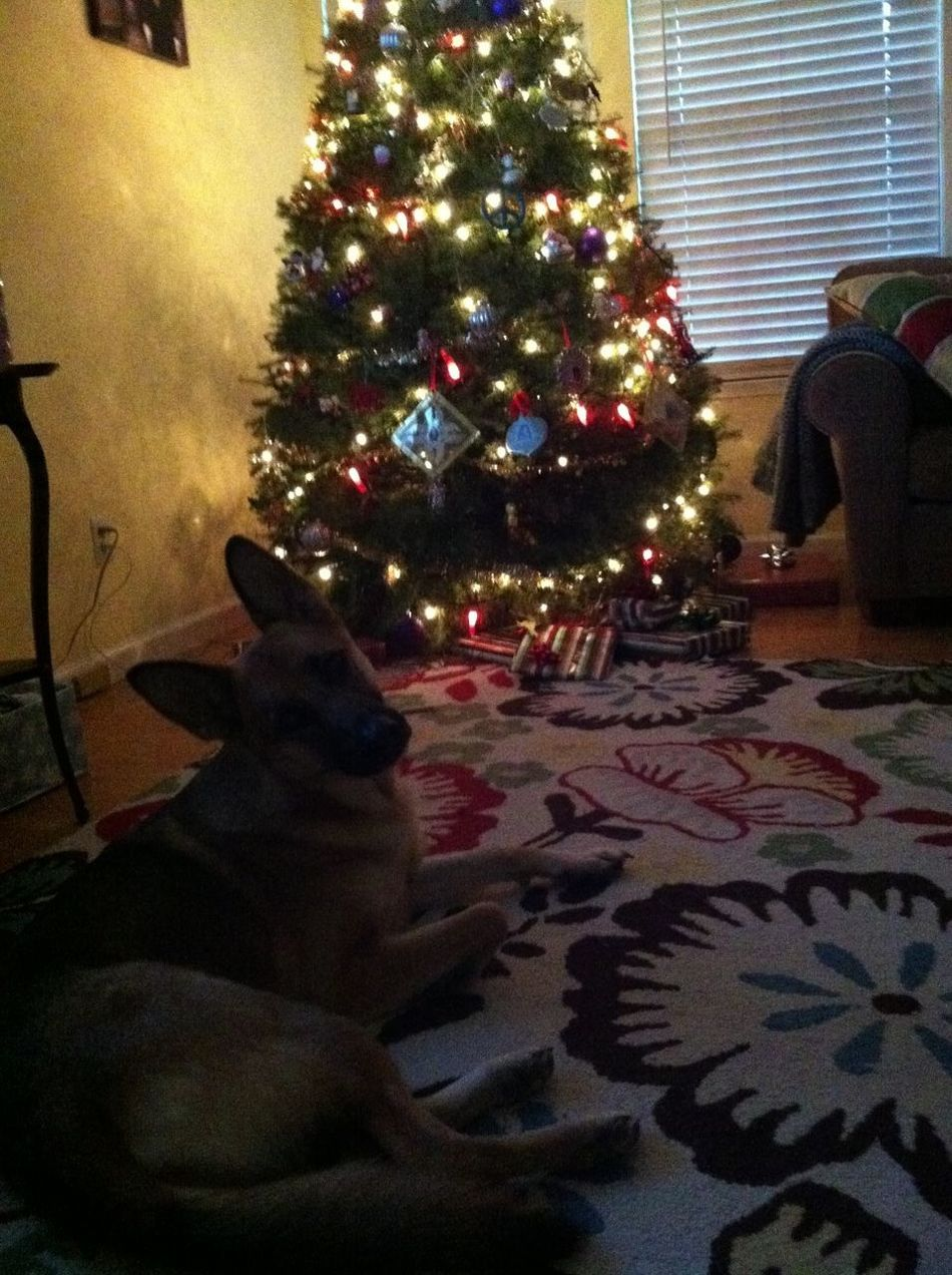 Juno The Christmas Pup