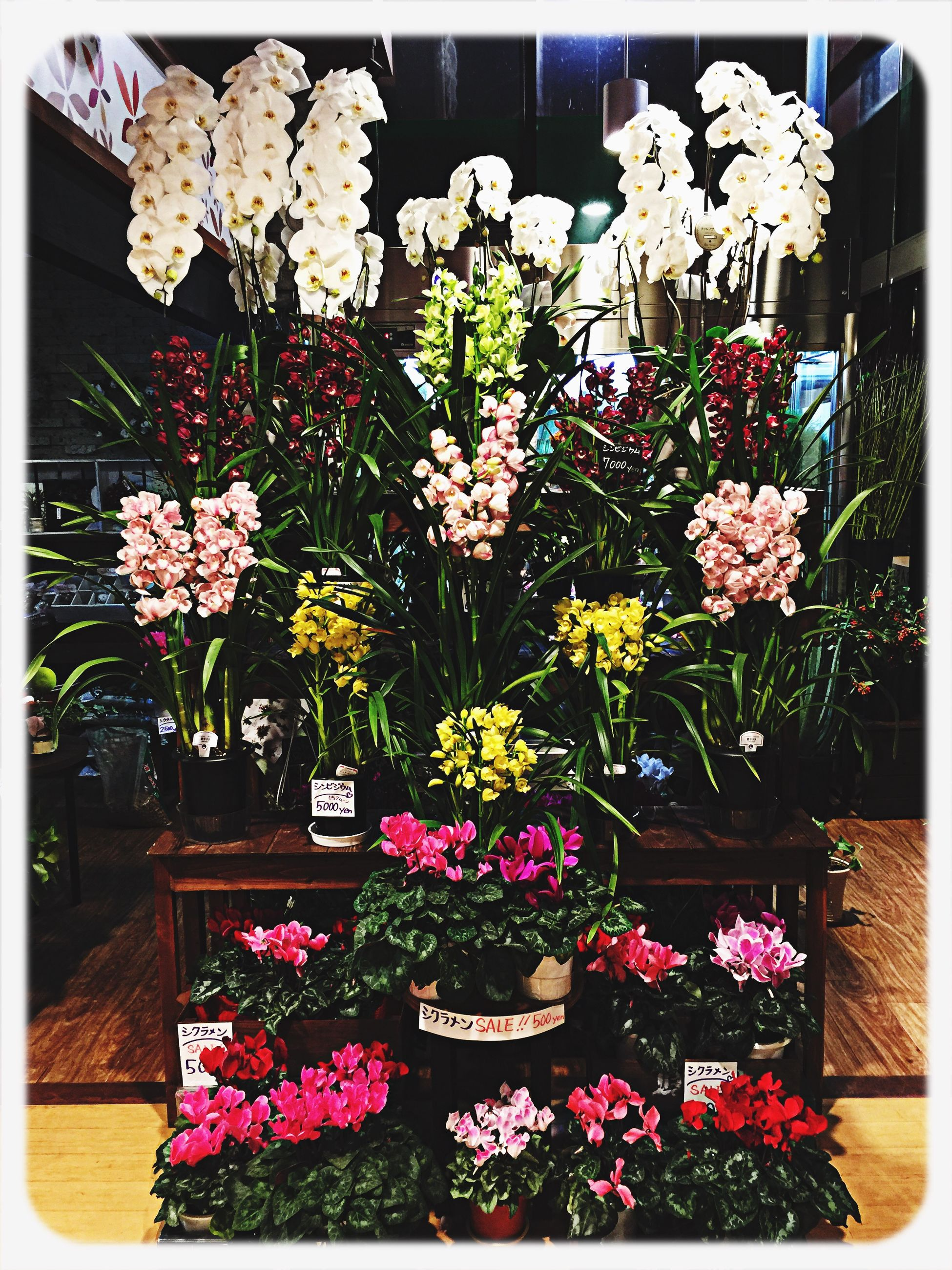 flower, transfer print, freshness, auto post production filter, fragility, growth, beauty in nature, petal, nature, plant, bunch of flowers, blooming, flower head, blossom, in bloom, pink color, potted plant, bouquet, abundance, indoors