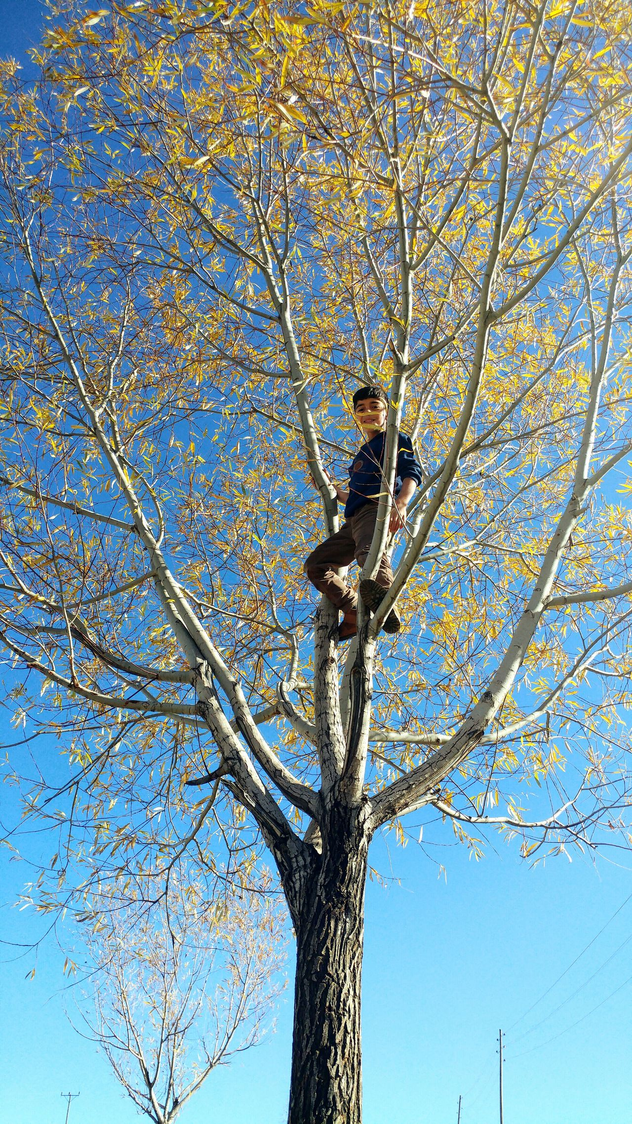 Tree Clear Sky Beauty In Nature Childhood Children Photography Köy öğretmeni Olmak Nature_collection Landscape_collection EyeEmNatureLover Loving Children Fall Beauty Villagescape Freshness Being A Teacher Portrait Boys My Student <3 Children Only Loving Kids Low Angle View One Person Branch Outdoors