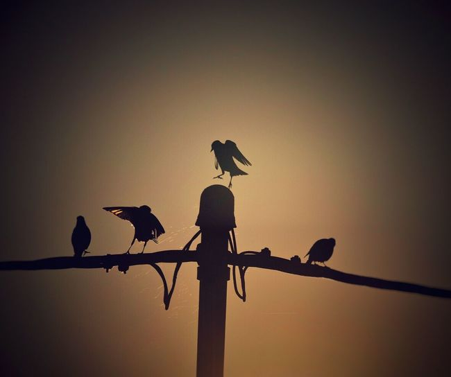 Kleines Geplänkel um den besten Platz 😉 Vogel Sonnenaufgang Perching Wildlife Bird Animals In The Wild Animal Themes Silhouette Two Animals Zoology Togetherness Low Angle View Vertebrate Avian Perched Power Line  Power Cable Animal Power Supply Sky Day Cable Morning Ladyphotographerofthemonth Sunrise