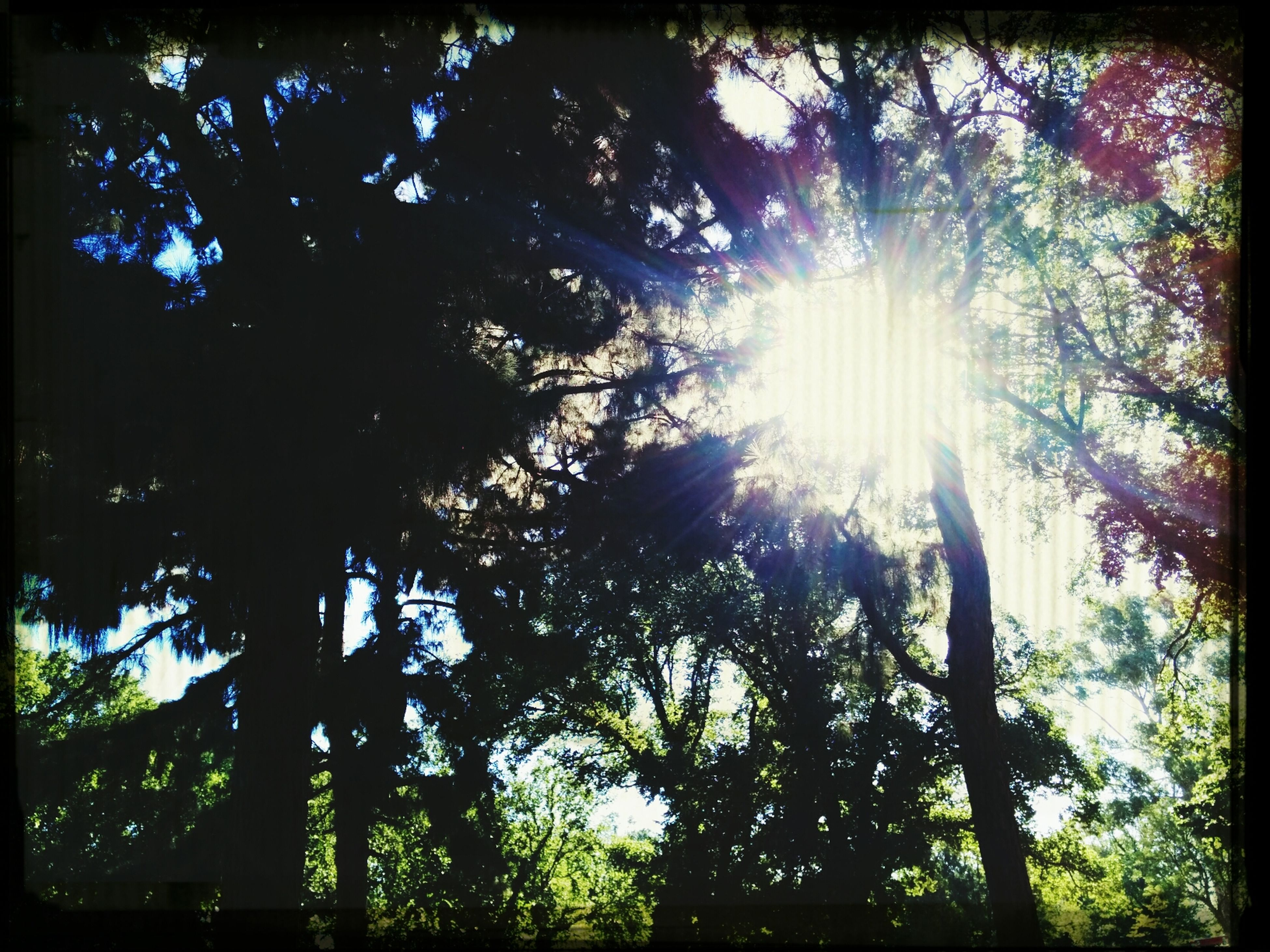 tree, sun, low angle view, growth, sunbeam, sunlight, tranquility, nature, beauty in nature, lens flare, tree trunk, transfer print, branch, sky, tranquil scene, scenics, auto post production filter, back lit, sunny, day