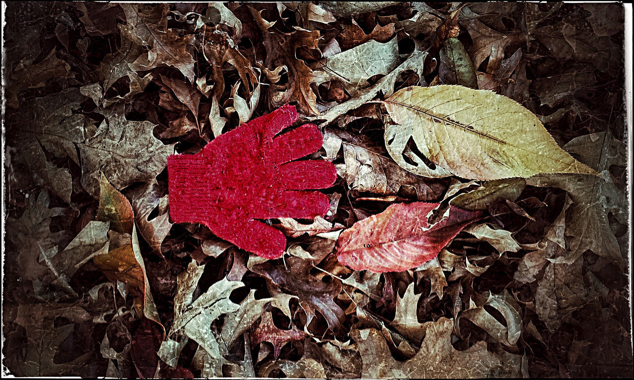 Autumn Autumn Colors Autumn Leaves Child Child's Glove Childhood Glove Lost Glove Red Right Hand