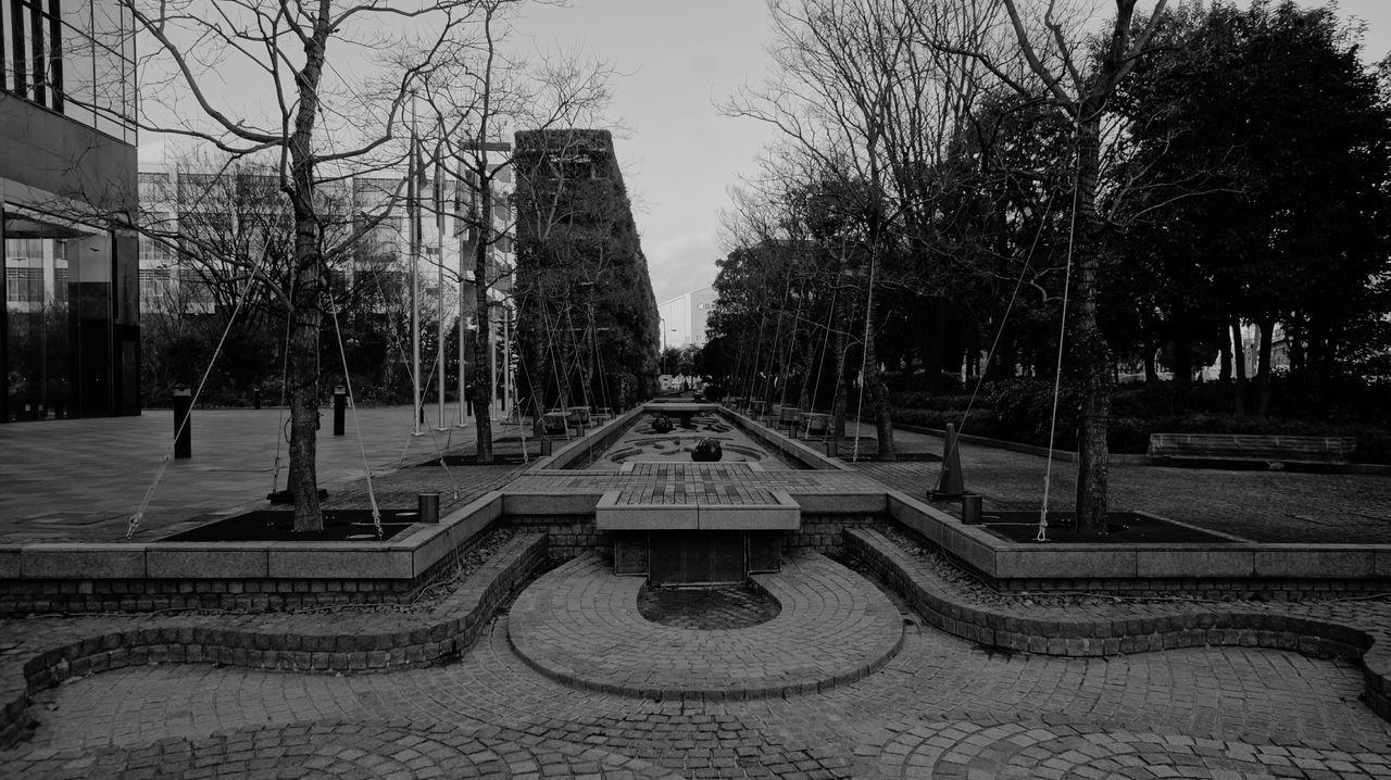 Day Tree Street Photography