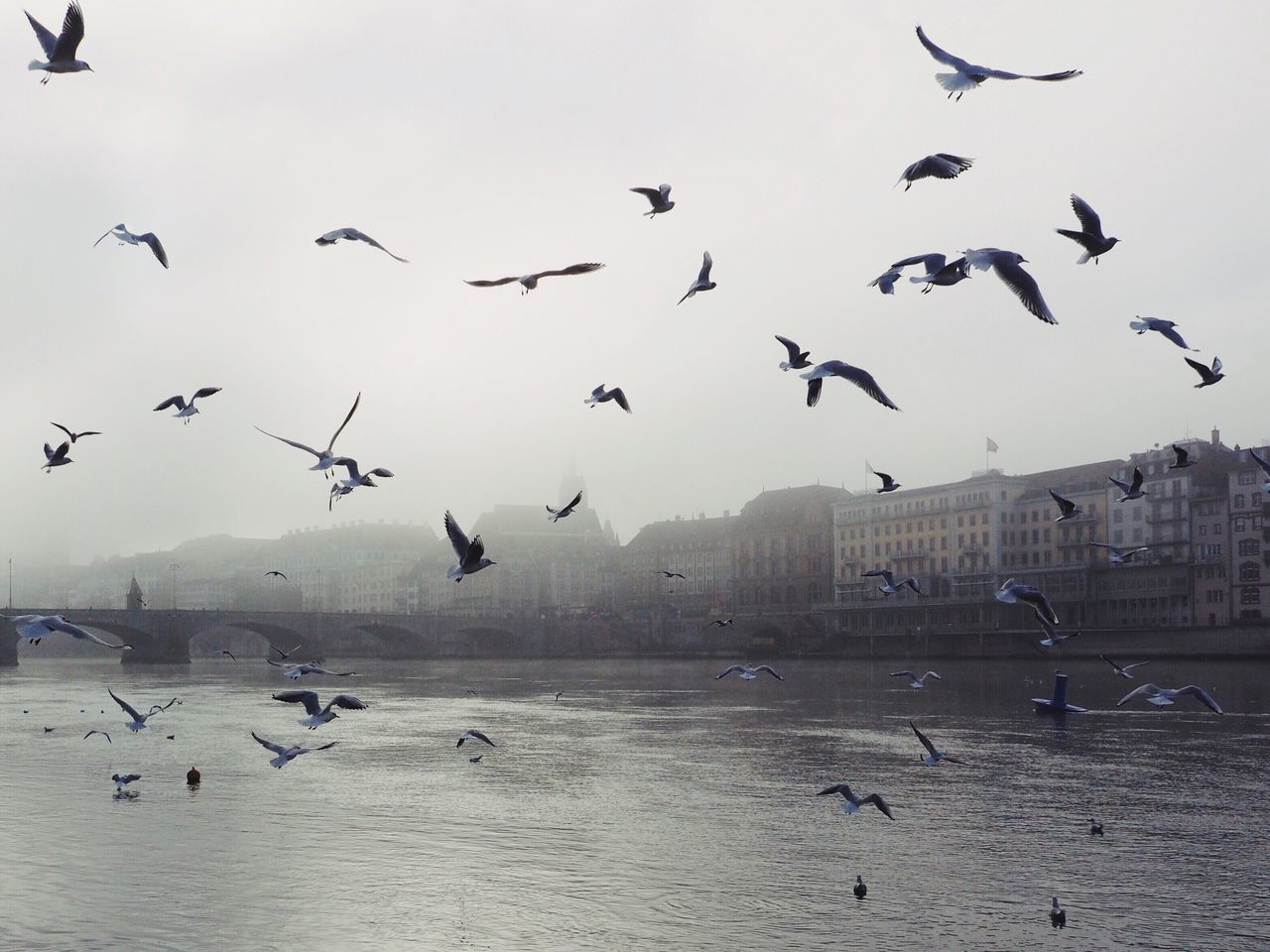 Bird Flying Large Group Of Animals Animal Themes Flock Of Birds Nature Outdoors Spread Wings Building Exterior Travel Destinations Water Cityscape Urban Landscape Fog Scenics at Basel, Switzerland