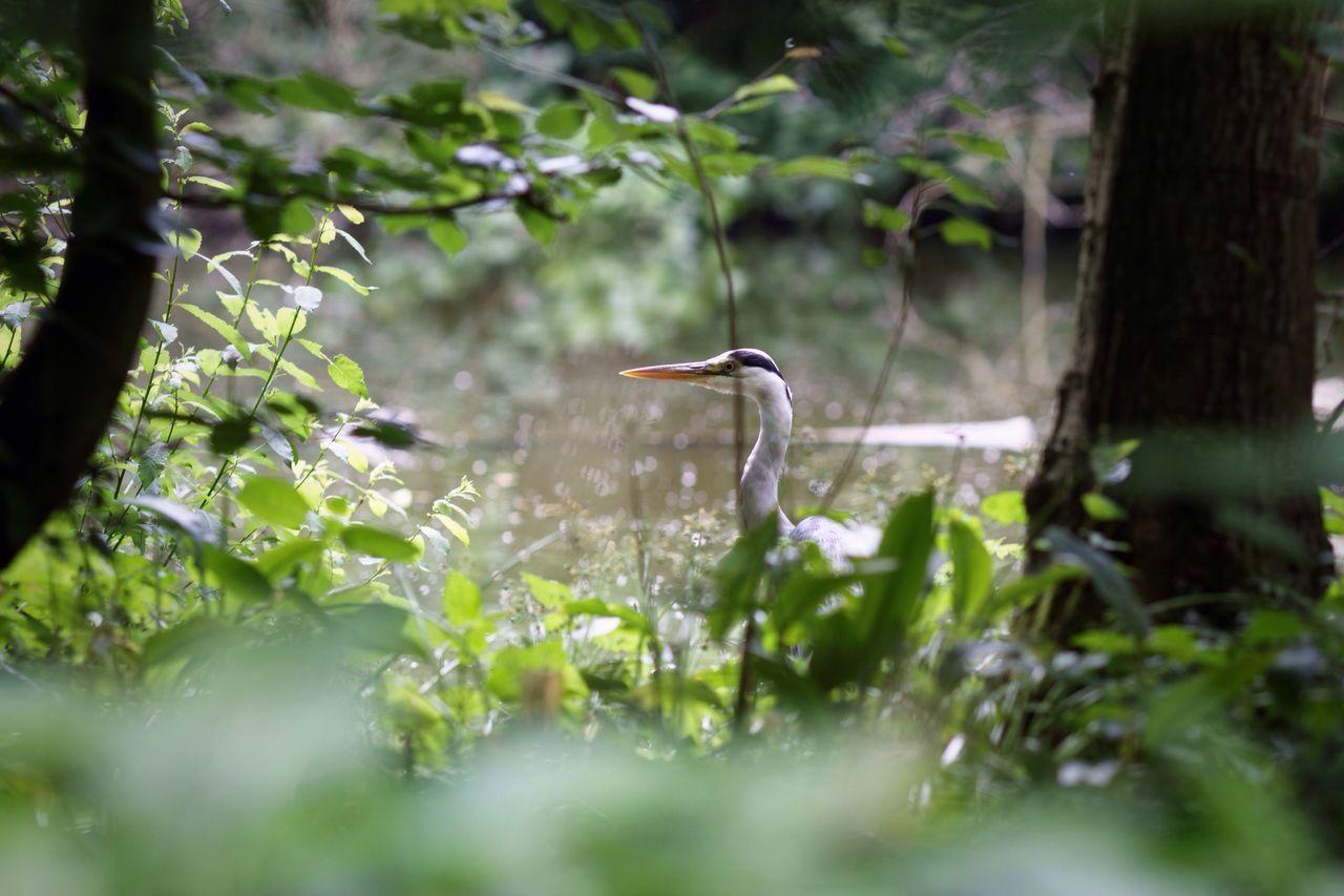 Heron In Disguise Sneaky Peek Blurry