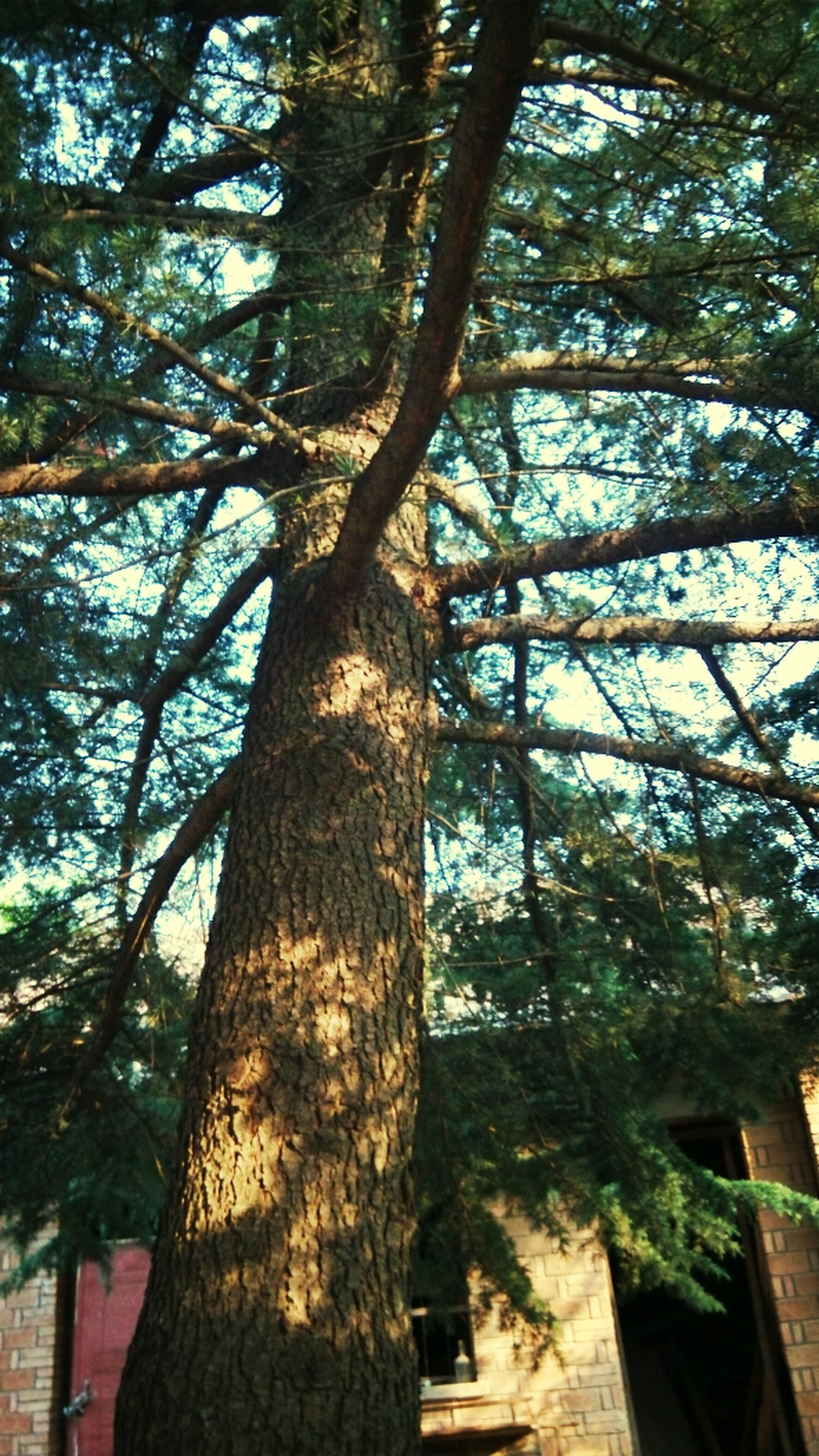 tree, tree trunk, low angle view, branch, growth, nature, sunlight, building exterior, sky, day, built structure, outdoors, no people, architecture, tranquility, beauty in nature, shadow, wood - material, green color, park - man made space