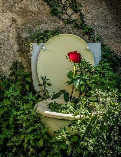Cada Día Es El Día De La Rosa Rosa