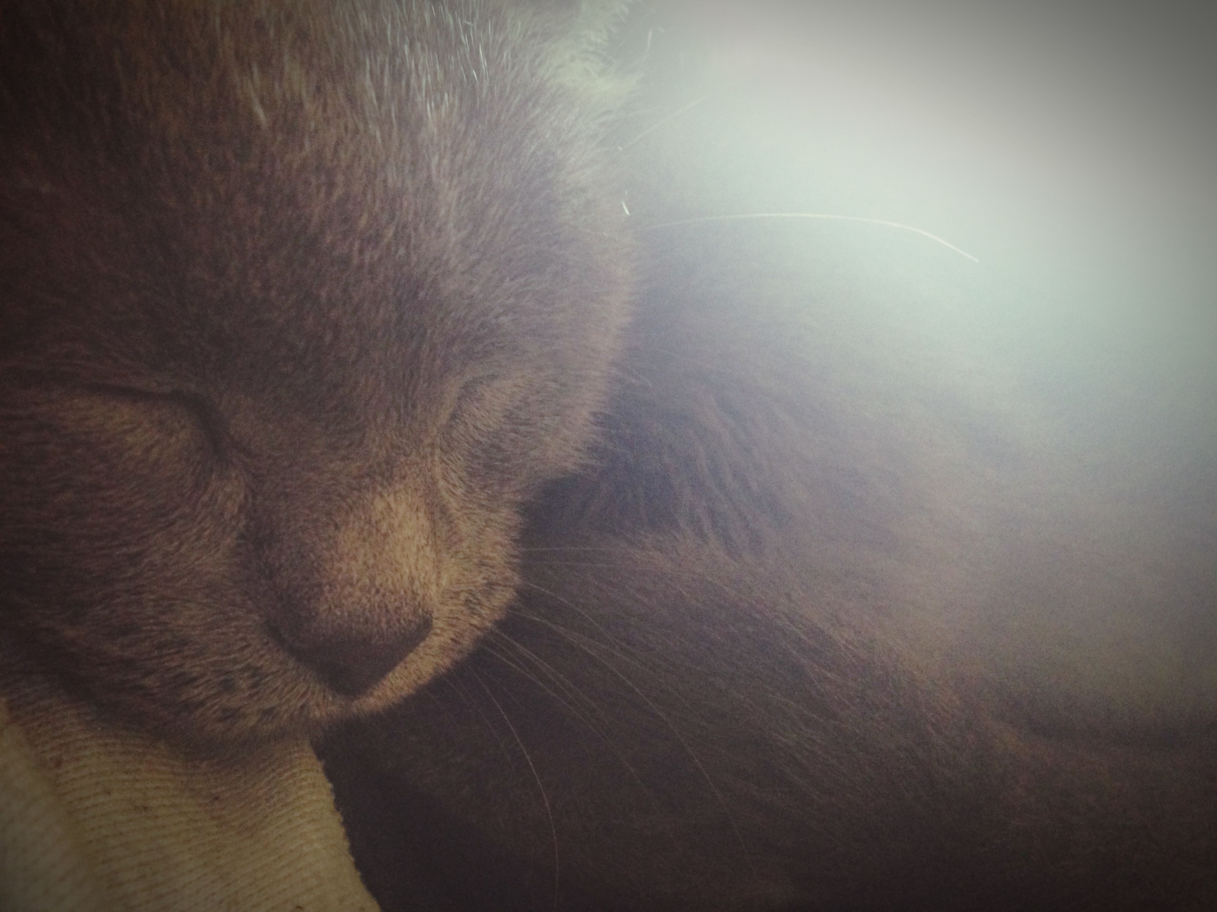 one animal, domestic animals, animal themes, mammal, pets, indoors, domestic cat, cat, close-up, animal head, dog, feline, relaxation, animal body part, whisker, looking away, part of, no people, home interior