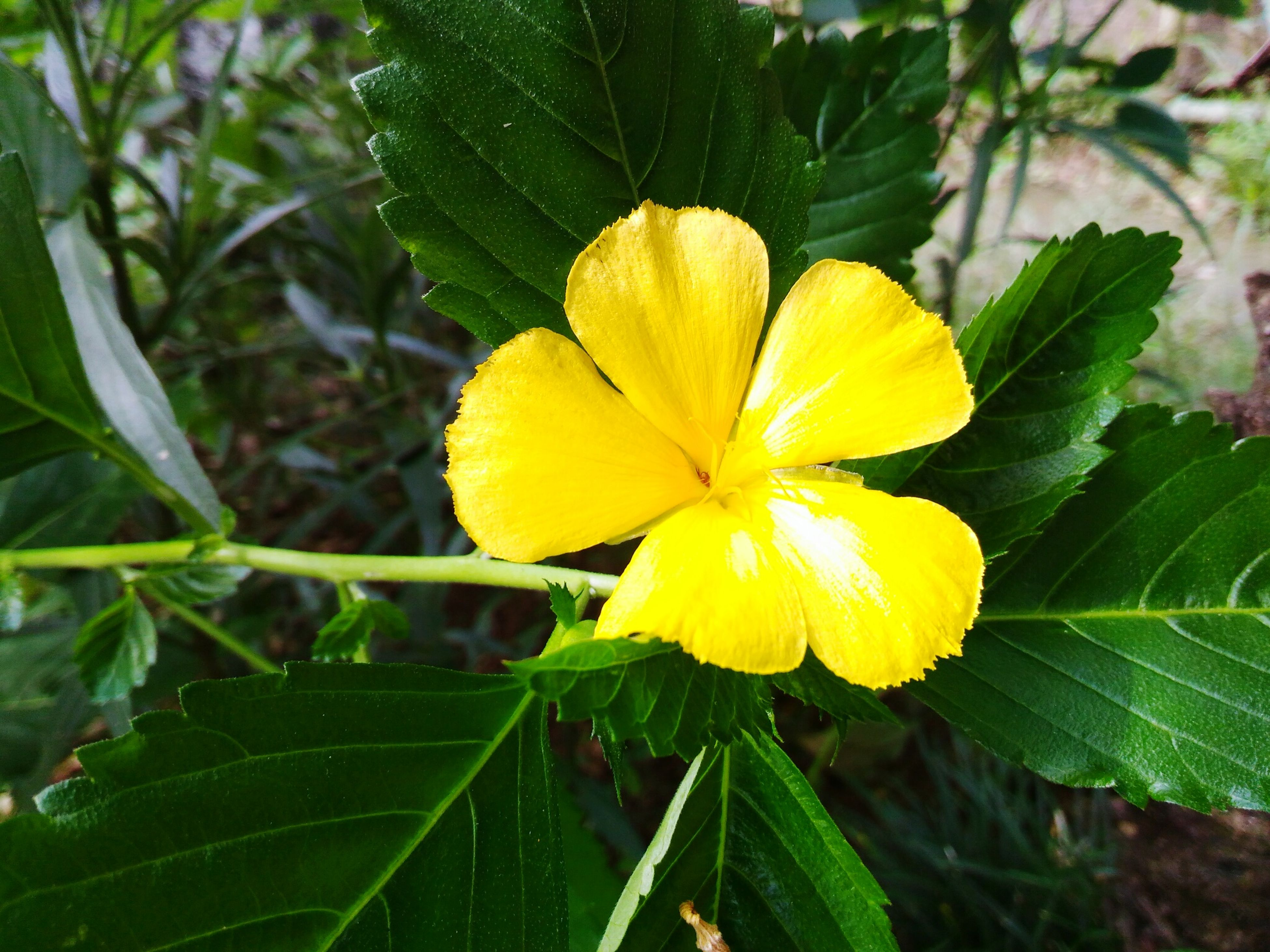 yellow, flower, plant, nature, growth, leaf, fragility, beauty in nature, close-up, freshness, outdoors, blooming, green color, flower head, no people, day