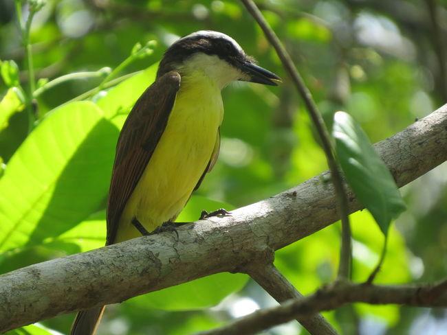 Amazon Amazon Bird Amazon Rainforest Amazon River Amazonas Animal Themes Animals In The Wild Bird Brazil Nature At Its Best Nature Up Close One Animal
