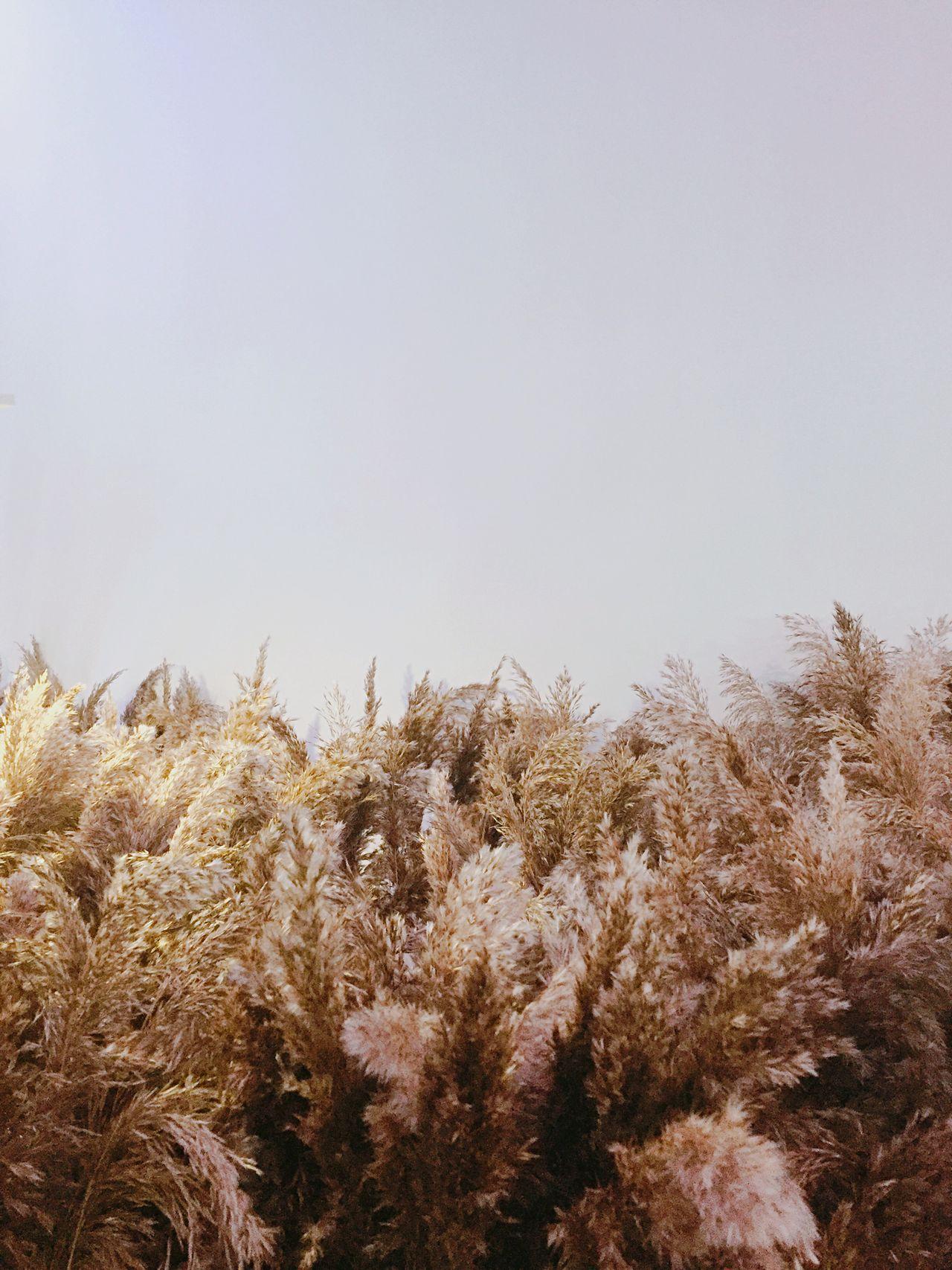 Gentle monster Reeds Minimalism Simplicity IPhoneography