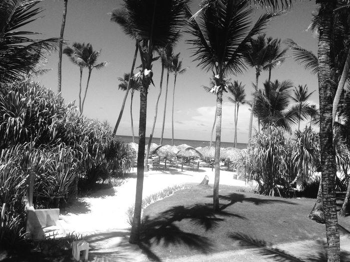 Paradise Paradise Beach beach Palm Trees Punta cana