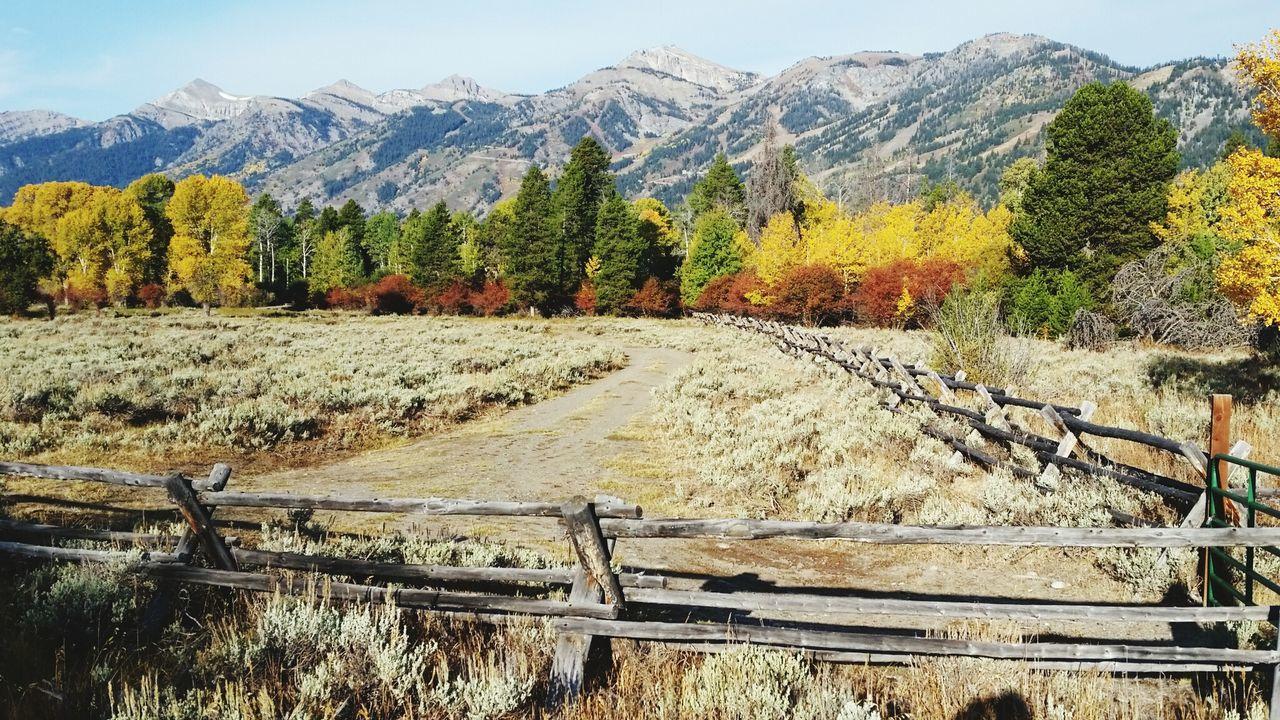 Tetons Buckrail Fence Ranch Life Sagebrush Wyoming Fall Colors Mountains