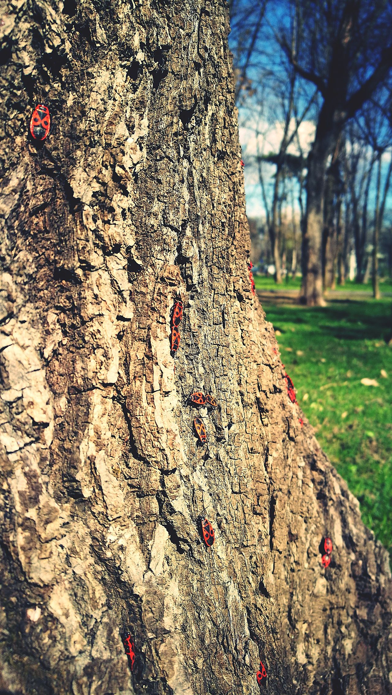 Tree Tree Trunk Nature Textured  Close-up Growth No People Outdoors Full Frame Day Insect Beauty In Nature Animal Themes