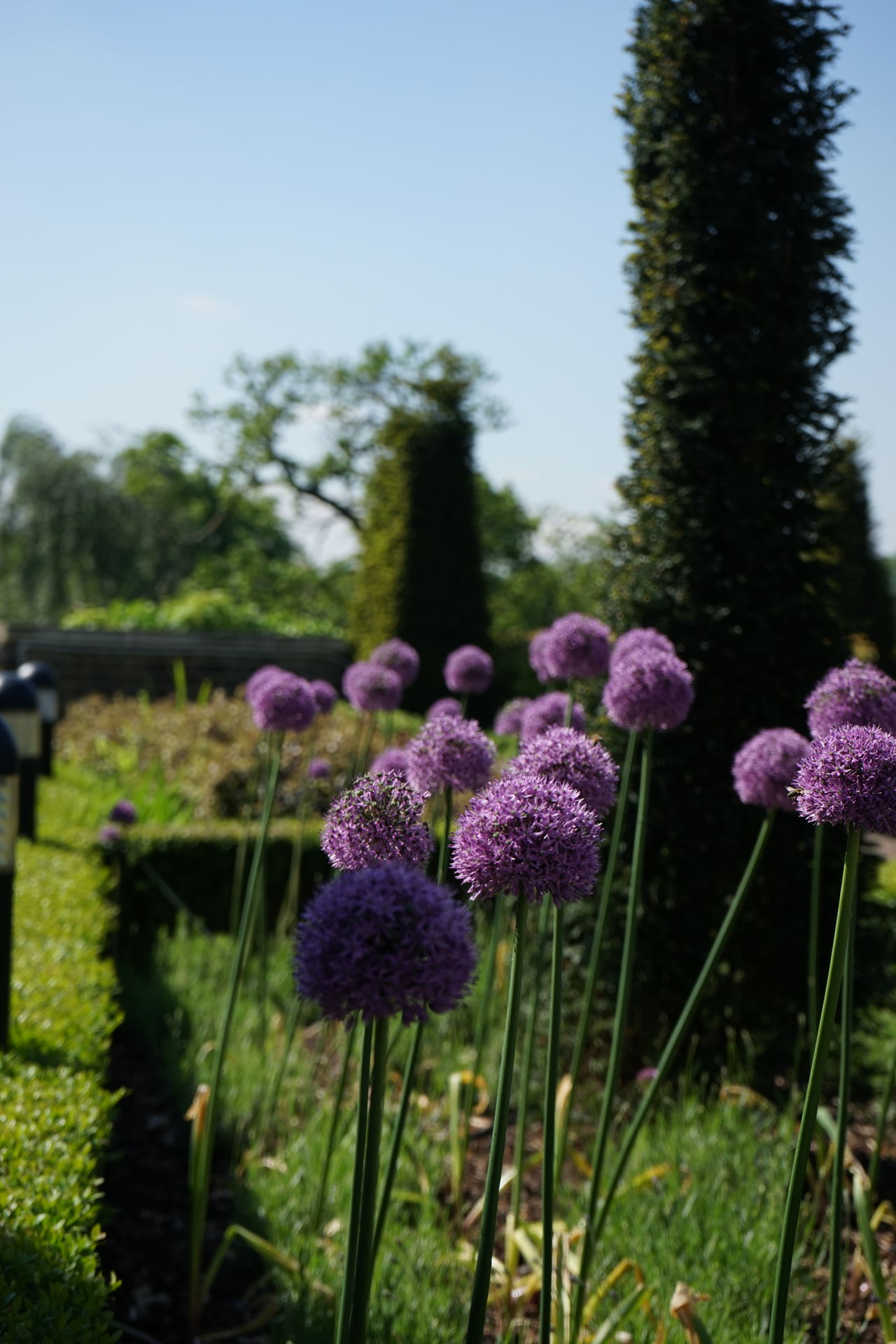 London Lifestyle Hanging Out Greenwich Observatory Garden Park Sunny Sunny Day Taking Photos Relaxing Enjoying Life Blue Sky Walking Around Purple Flower Green Uk London Greenwich Park Greenwich Observatory No Filter No Edit Raw Photography