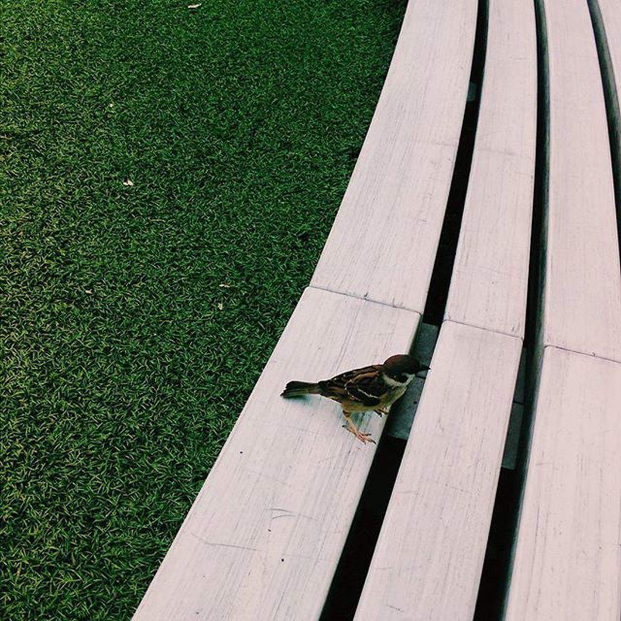 Sparrow is coming. 虎ノ門ヒルズのスズメは人間を給仕係と認識してるようです。クロワッサンを少し差し出そうとしてやめておきました。 Bird Sparrow Toranomon Toranomonhills Japan Tokyo Happy LOL Yolo Follow Instagood