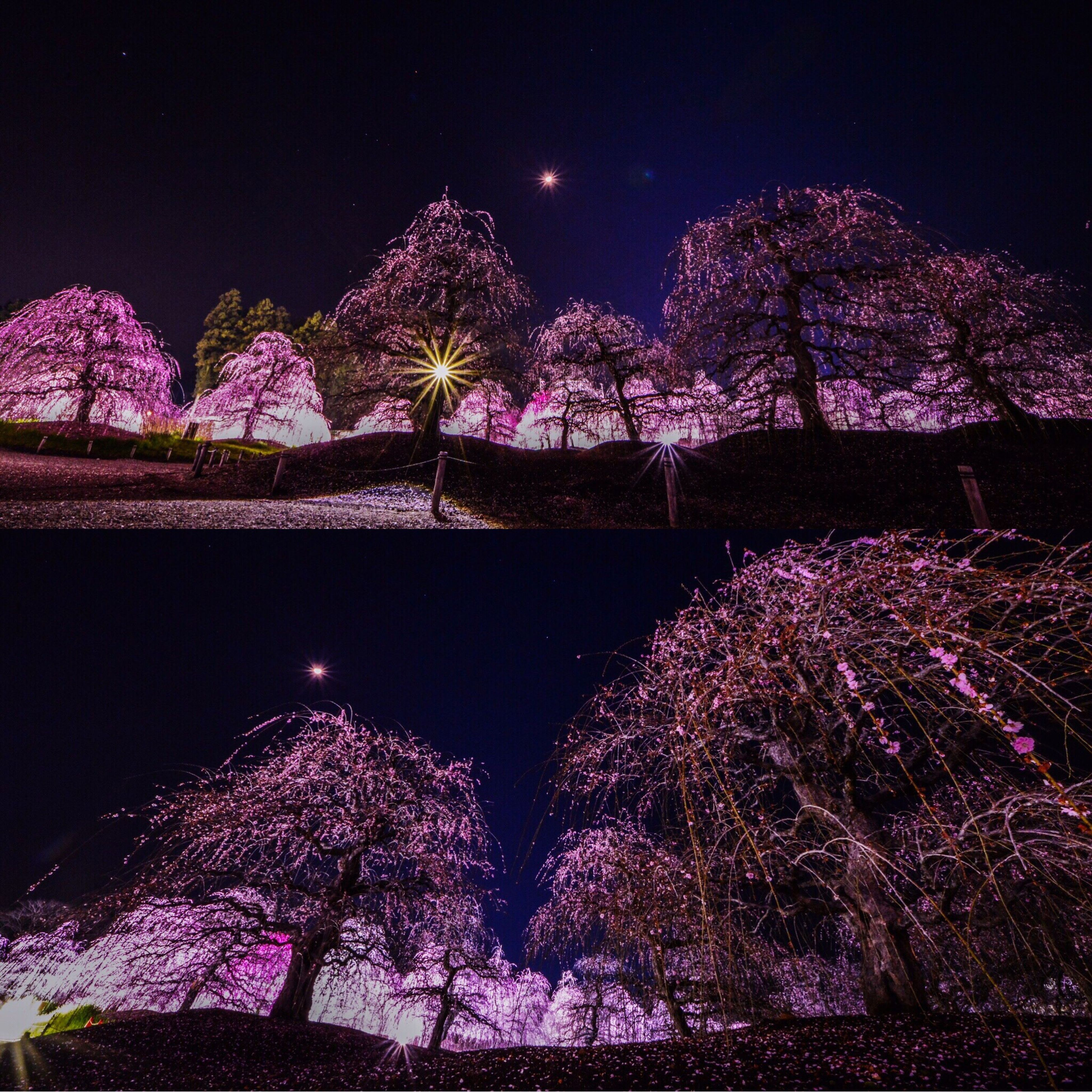 night, low angle view, no people, illuminated, pink color, outdoors, nature, sky, star - space, galaxy