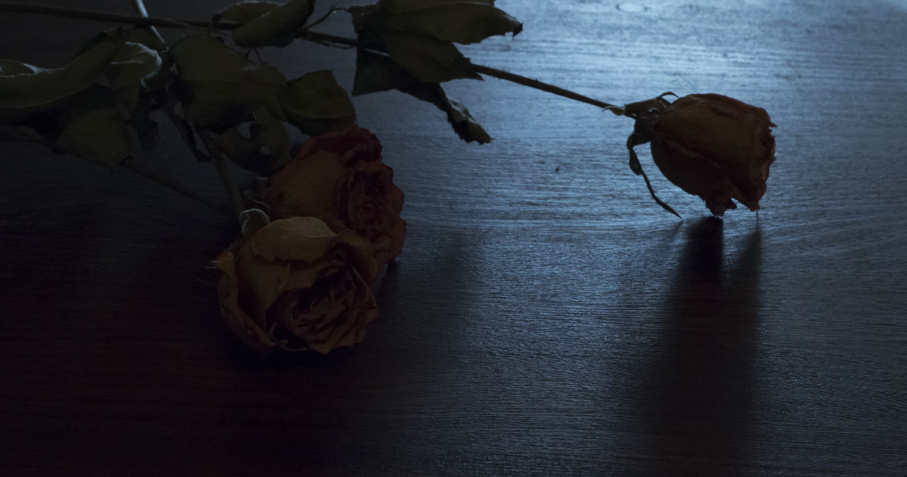 table, no people, indoors, flower, nature, leaf, close-up, beauty in nature, fragility, day, flower head
