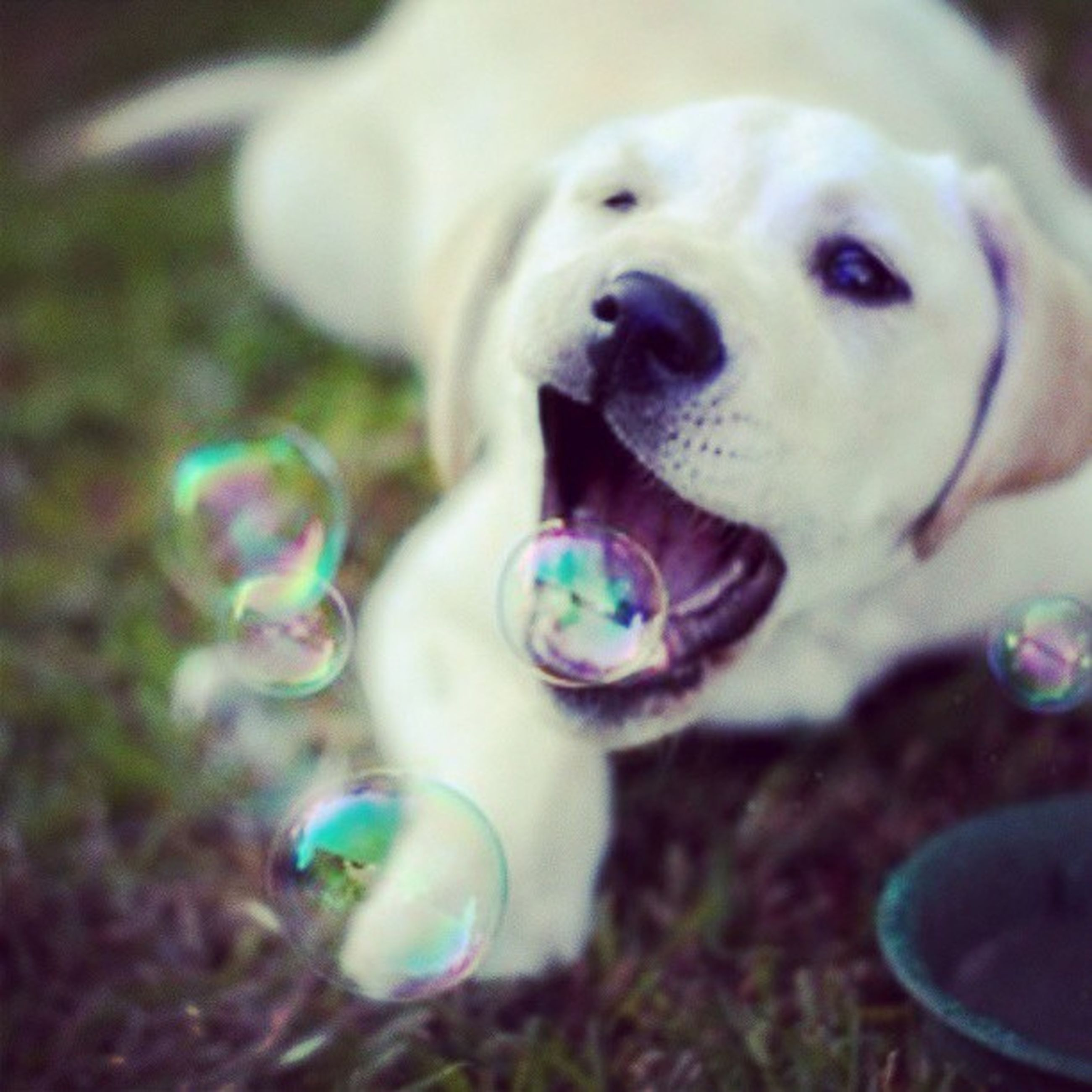 dog, pets, close-up, focus on foreground, domestic animals, looking at camera, indoors, animal themes, portrait, one animal, toy, no people, selective focus, freshness, cute, day, flower, childhood, field, ball