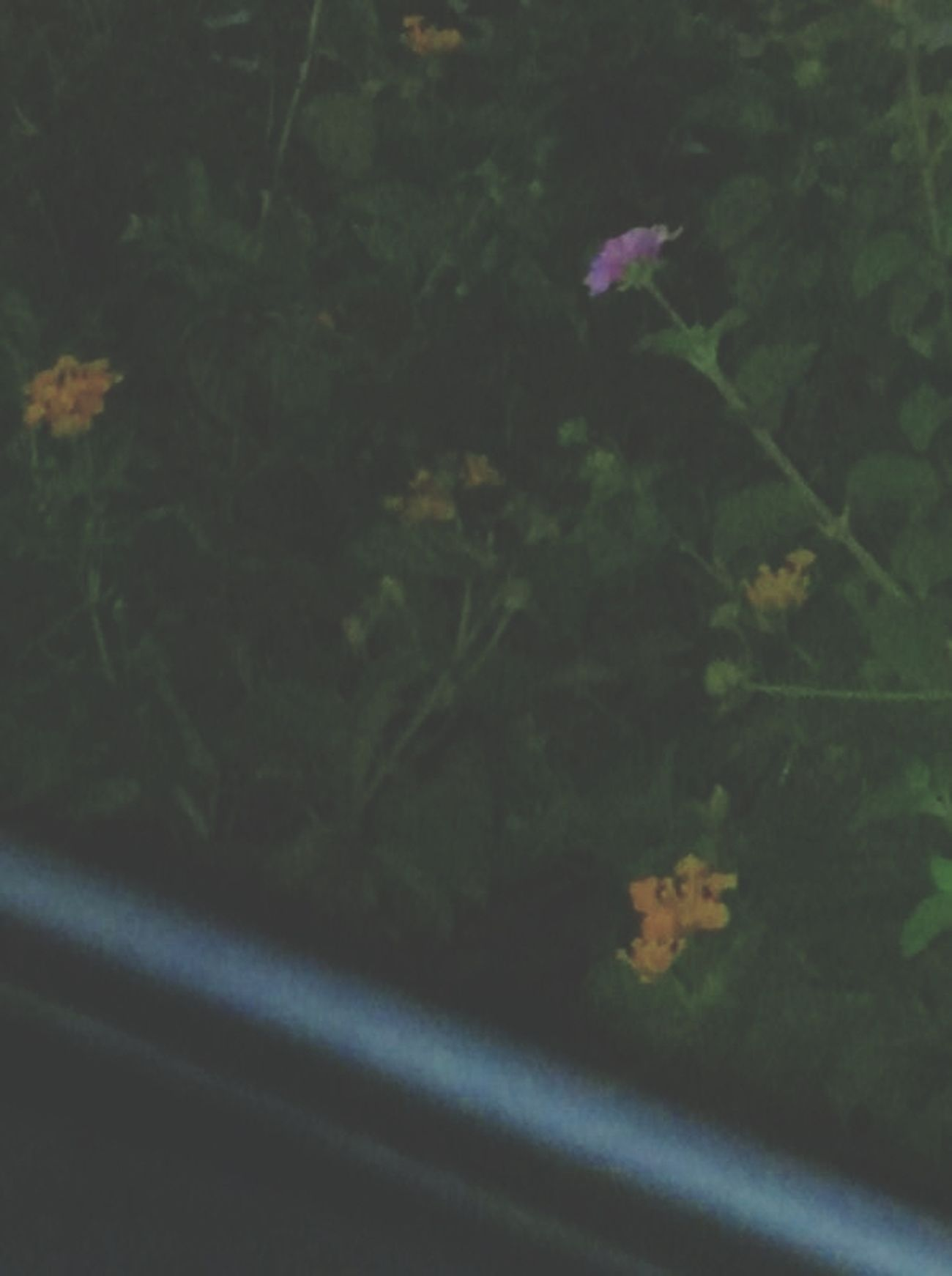 Flowers Nature Zoanna Davida 246