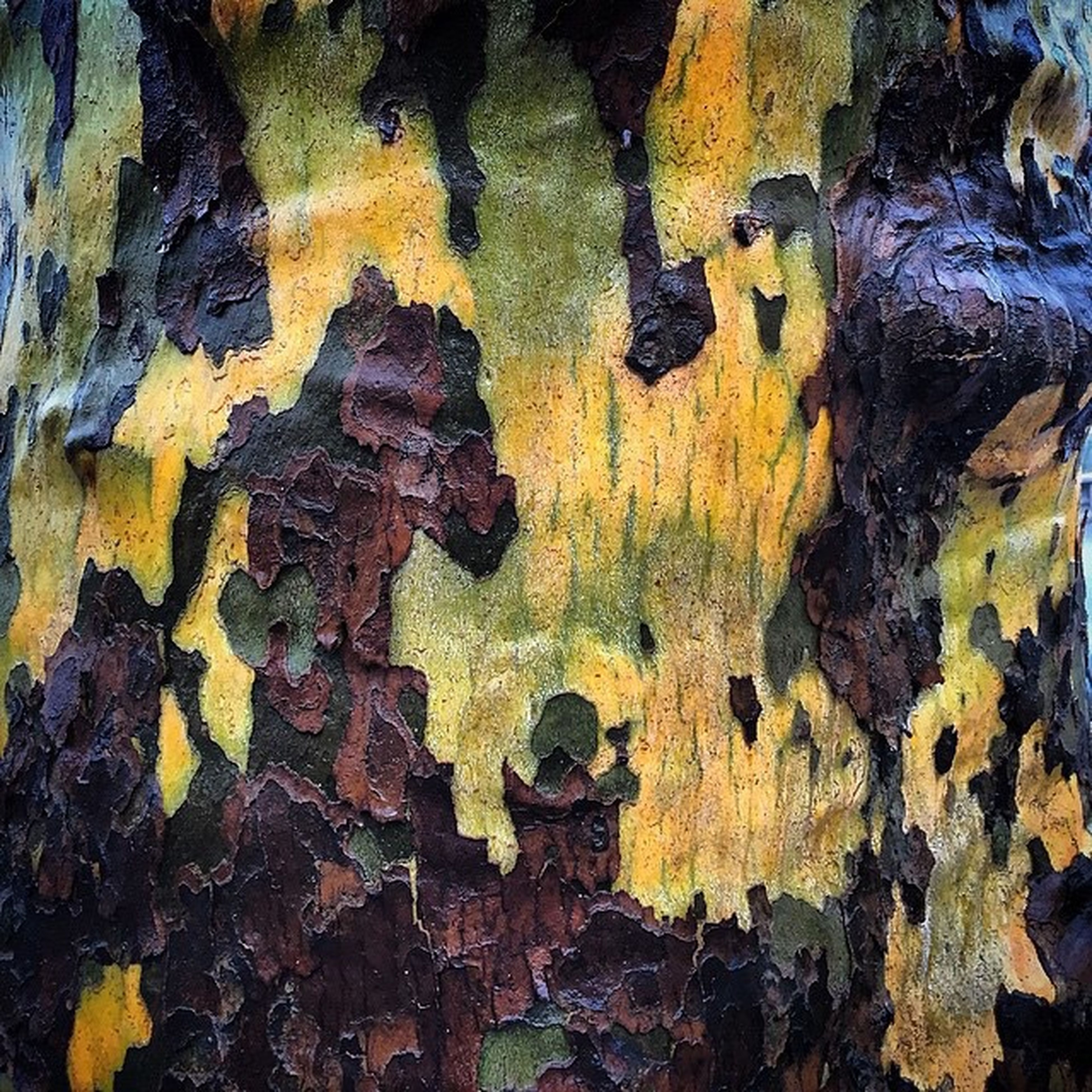 full frame, textured, backgrounds, natural pattern, yellow, nature, close-up, tree trunk, rough, no people, high angle view, outdoors, pattern, beauty in nature, day, autumn, tranquility, bark, rock - object, wood - material