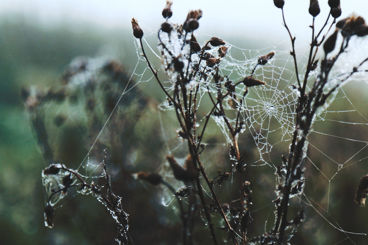 Catching droplets Autumn Beauty In Nature Close-up Cold Damp Day Dew Dew Drops Focus On Foreground Fragility Frost Growth Humid Nature Nature Photography No People Outdoors Peace Peace And Quiet Spider Spider Web Water Web