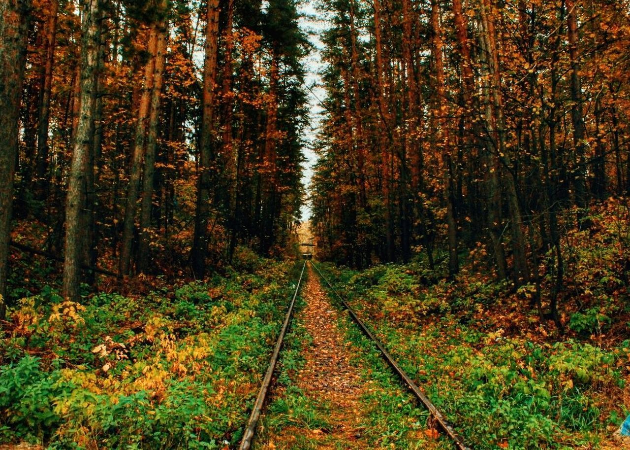 Tree Nature Railroad Track Growth Rail Transportation Change Forest Autumn Outdoors Beauty In Nature Scenics Day No People Tranquility