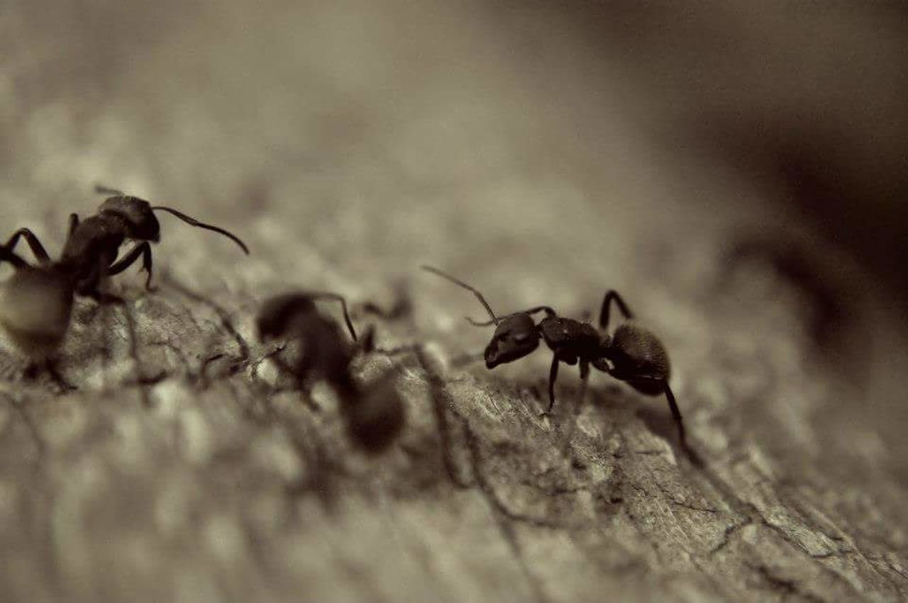 Insects  Ant Ants Insect Photography Photography Macro Macrophotography Ants At Work