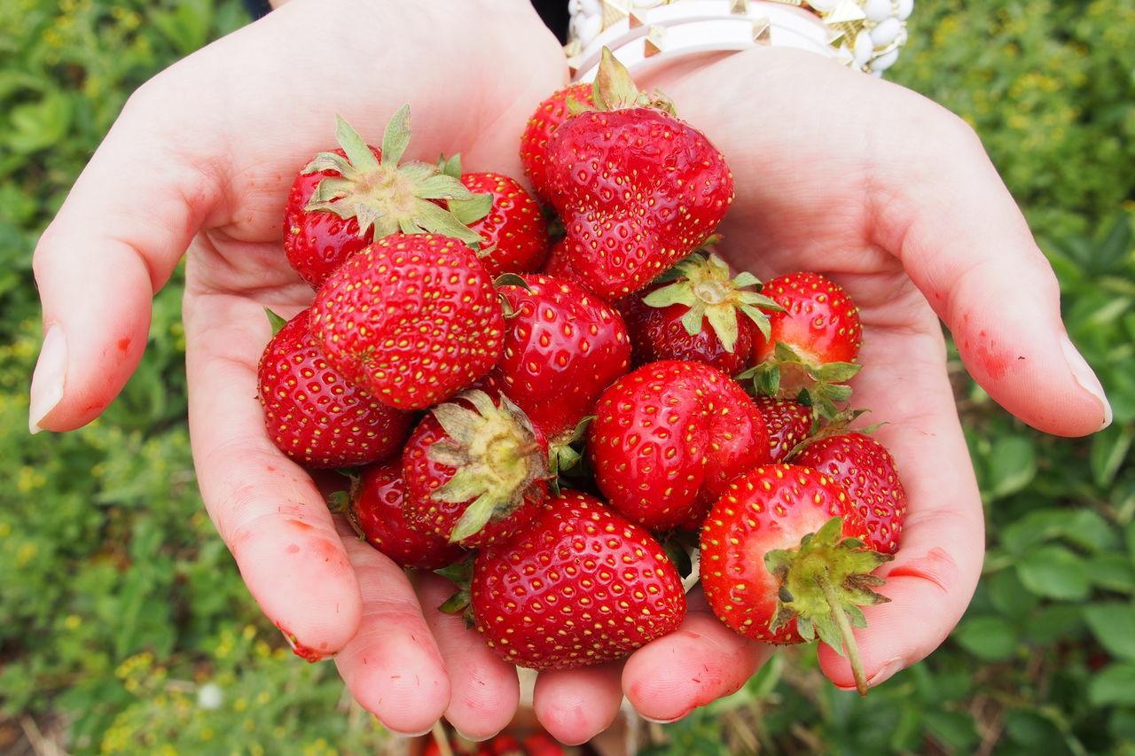 Beautiful stock photos of fruit, Abundance, Close-Up, Day, Elevated View
