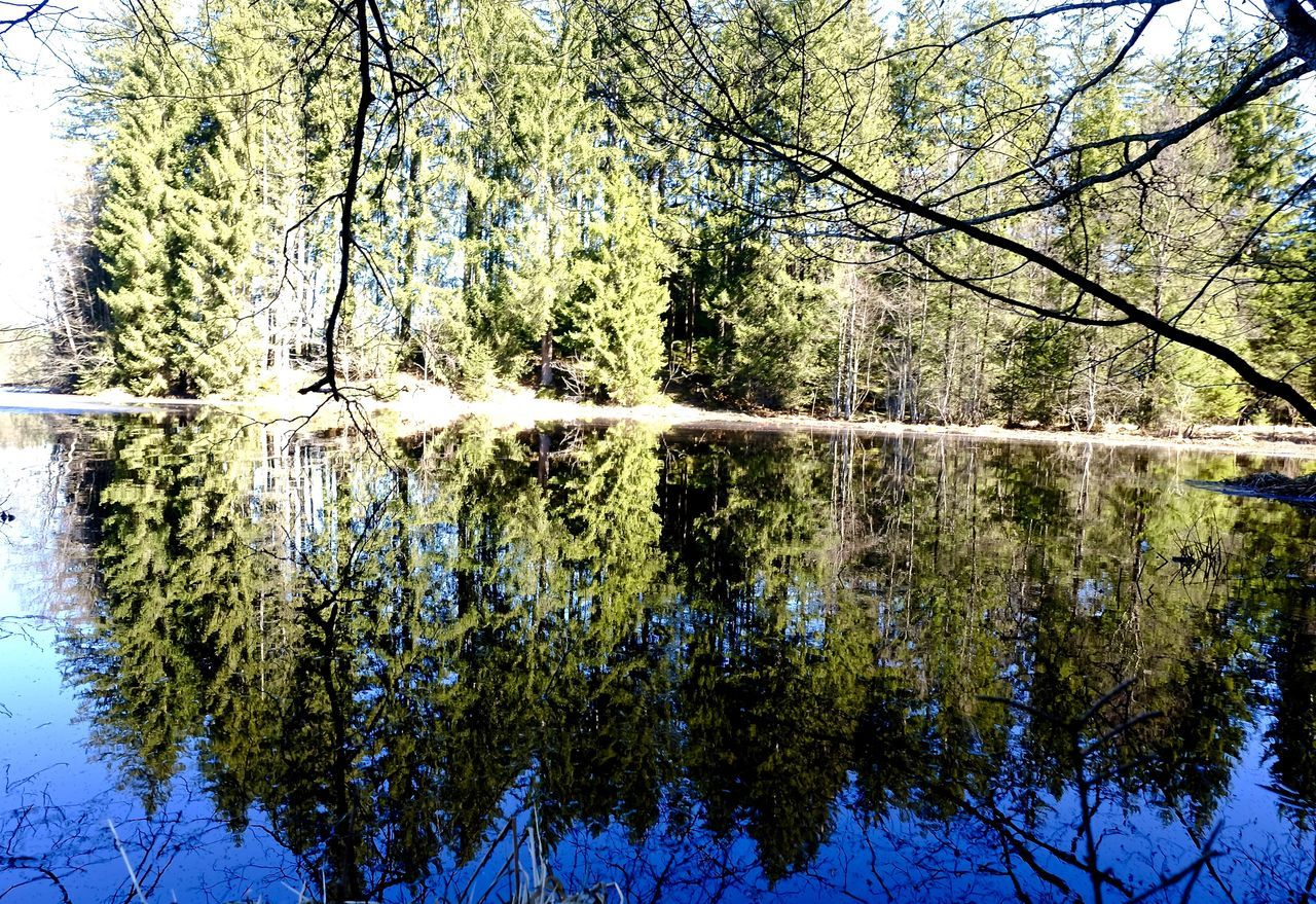 reflection, tree, nature, lake, outdoors, water, no people, day, tranquility, growth, beauty in nature, plant, scenics, branch, sky